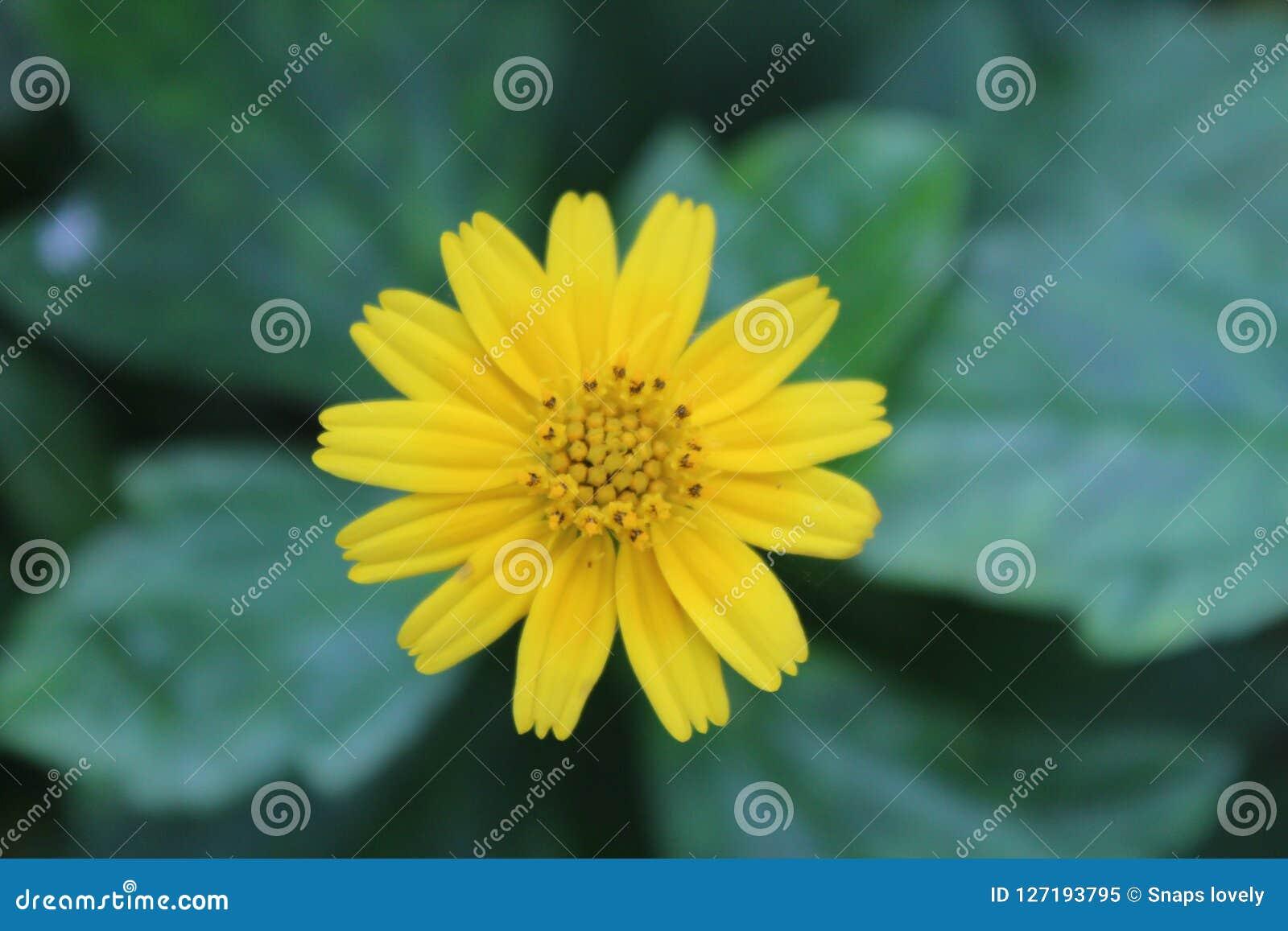 Yellow beautiful flowers stock image image of flowers 127193795 yellow beautiful flowers izmirmasajfo