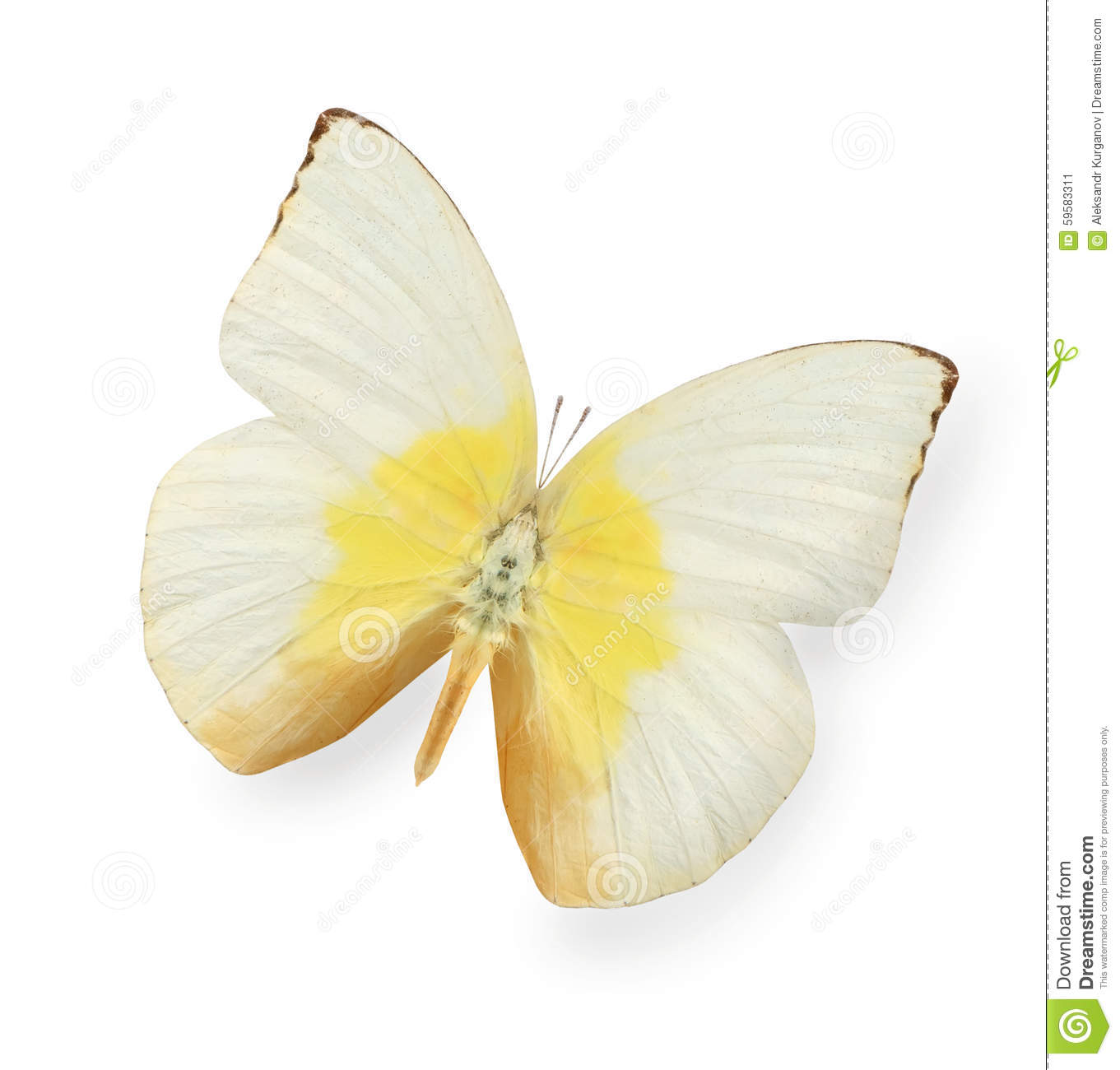Download Yellow And Beige Butterfly Isolated On White Stock Image - Image of open, flight: 59583311