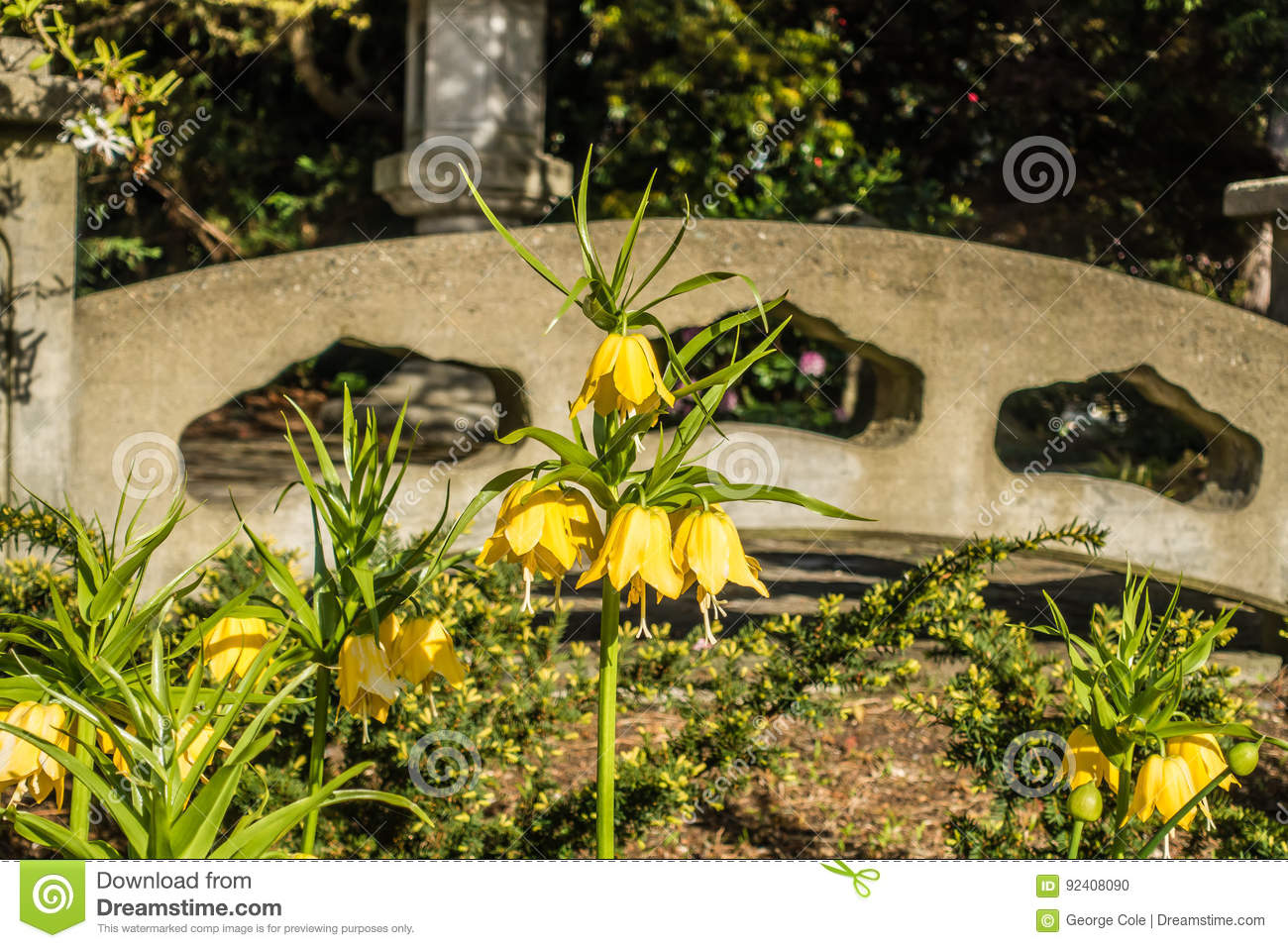 Yellow Bell Shaped Flwoers Stock Photo Image Of Blossoms 92408090