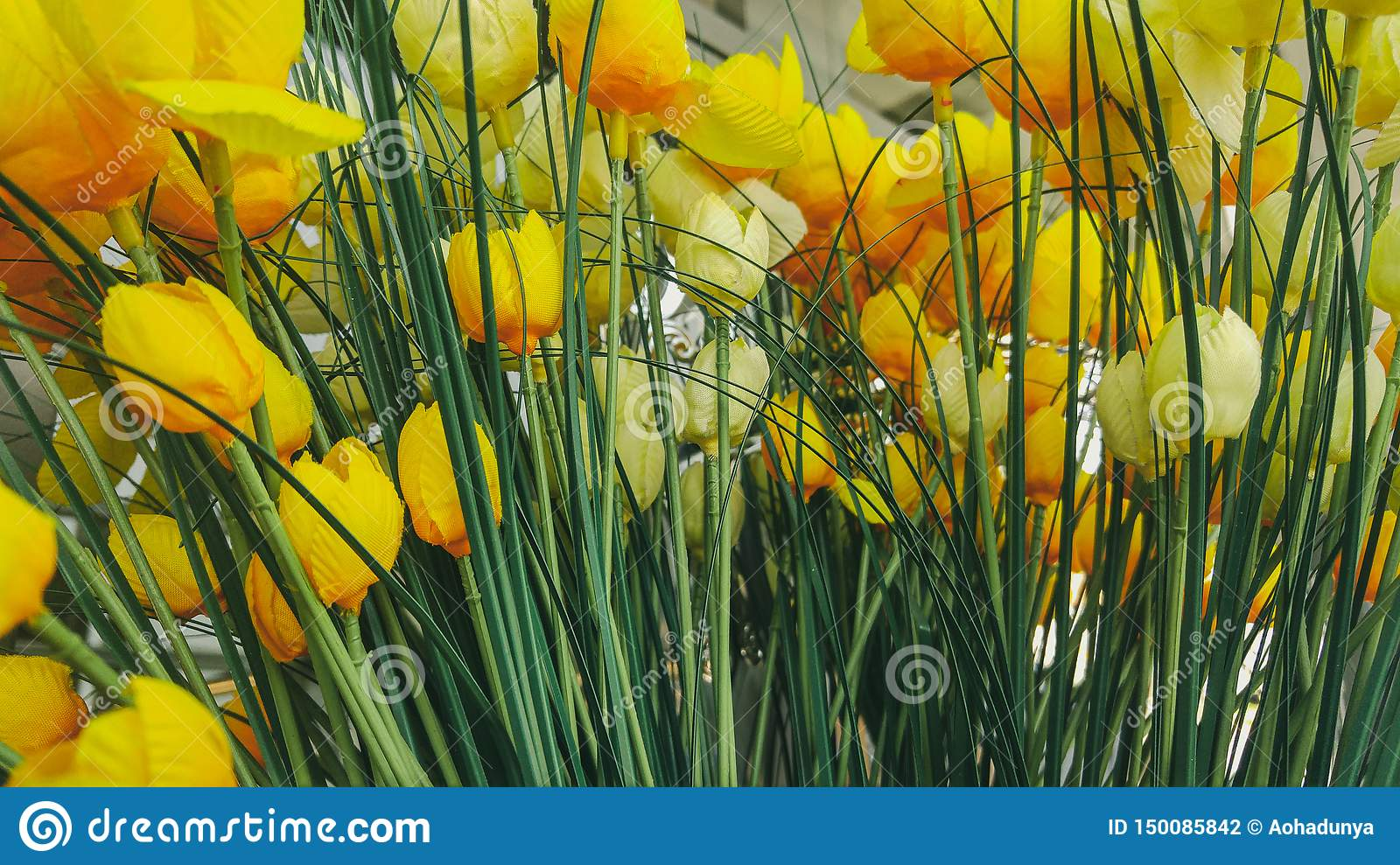 Yellow tulip flowers background in office