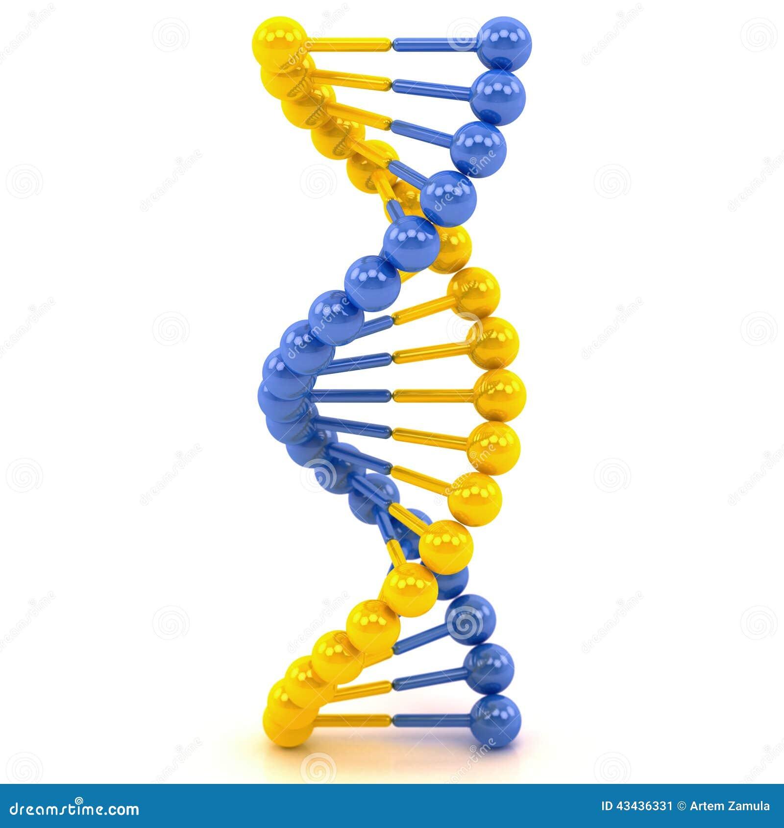 Dna Model Wallpaper: Yellow Blue DNA Molecule Stock Illustration. Image Of