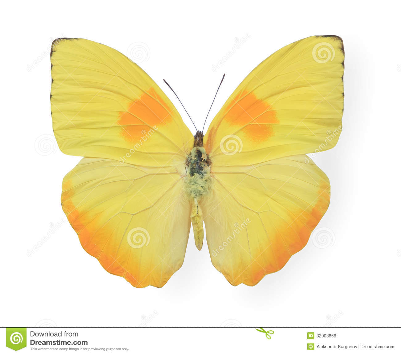 Download Yellow Butterfly Isolated On White Stock Photo - Image of isolated, nature: 32008666