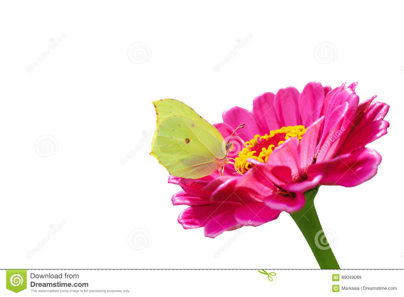 Yellow Butterfly On A Pink Flower Isolated On A White Stock Image