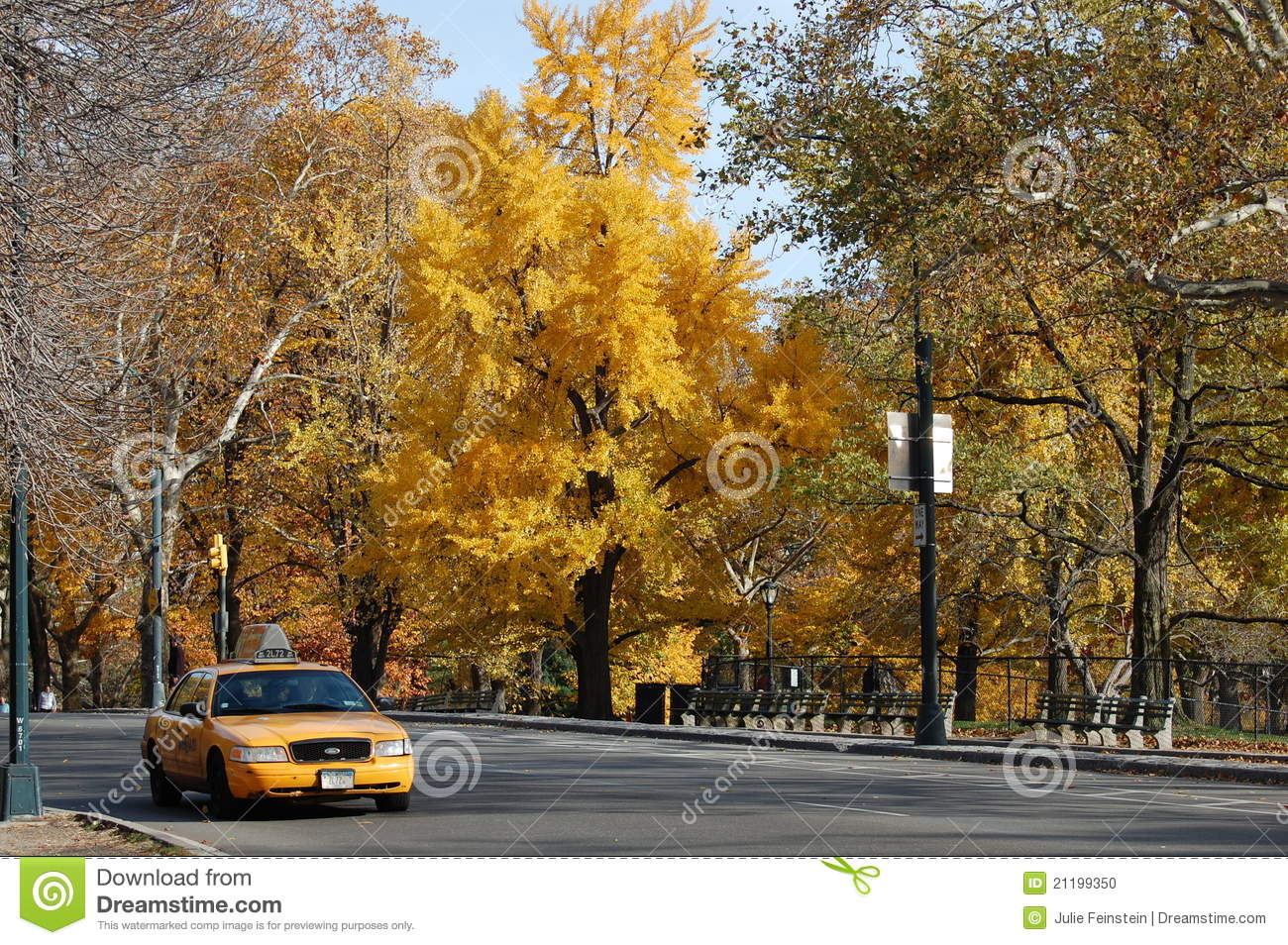 Yellow Cab in Central Park in New York City