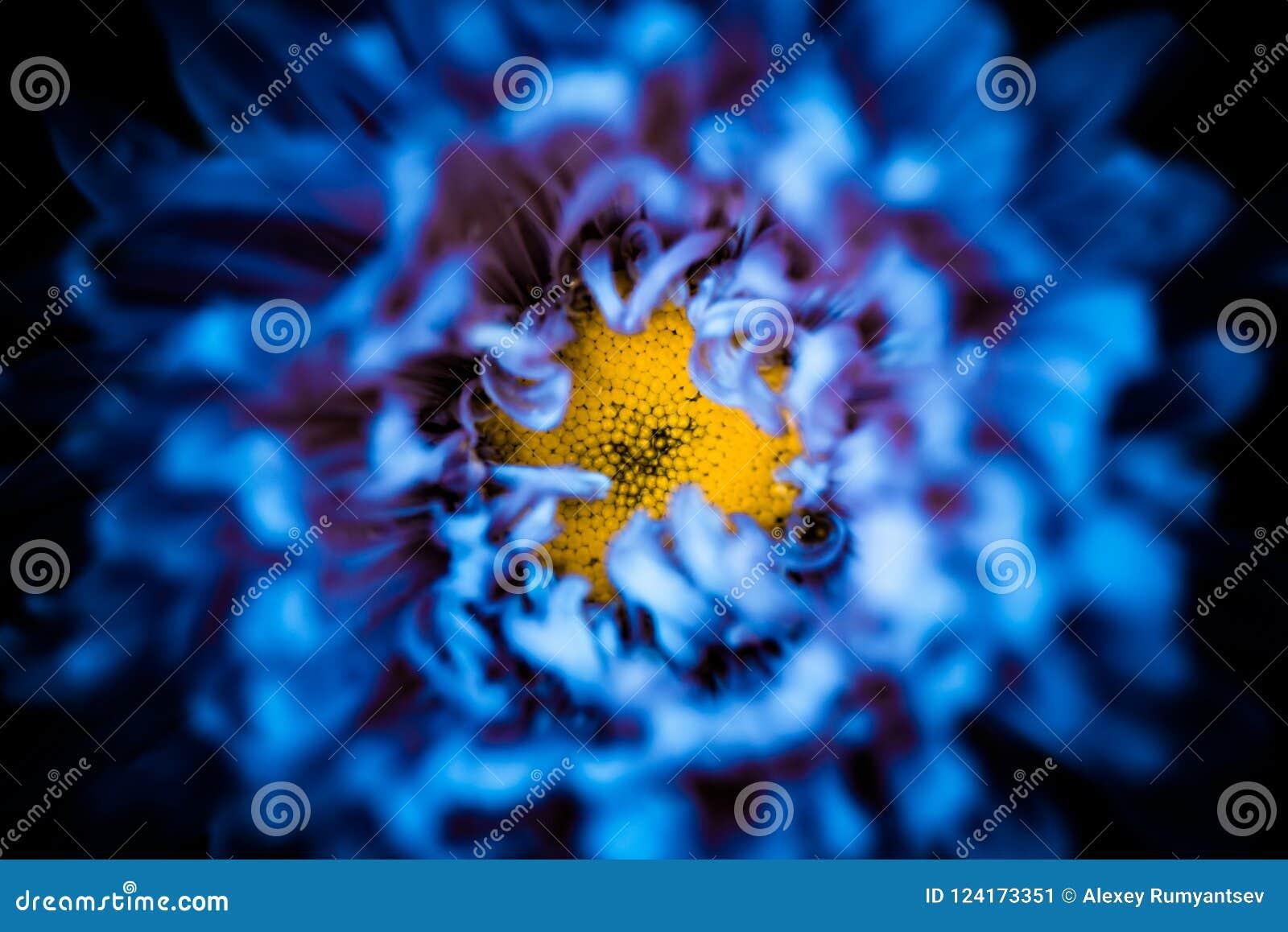 Inside abstract blue flower