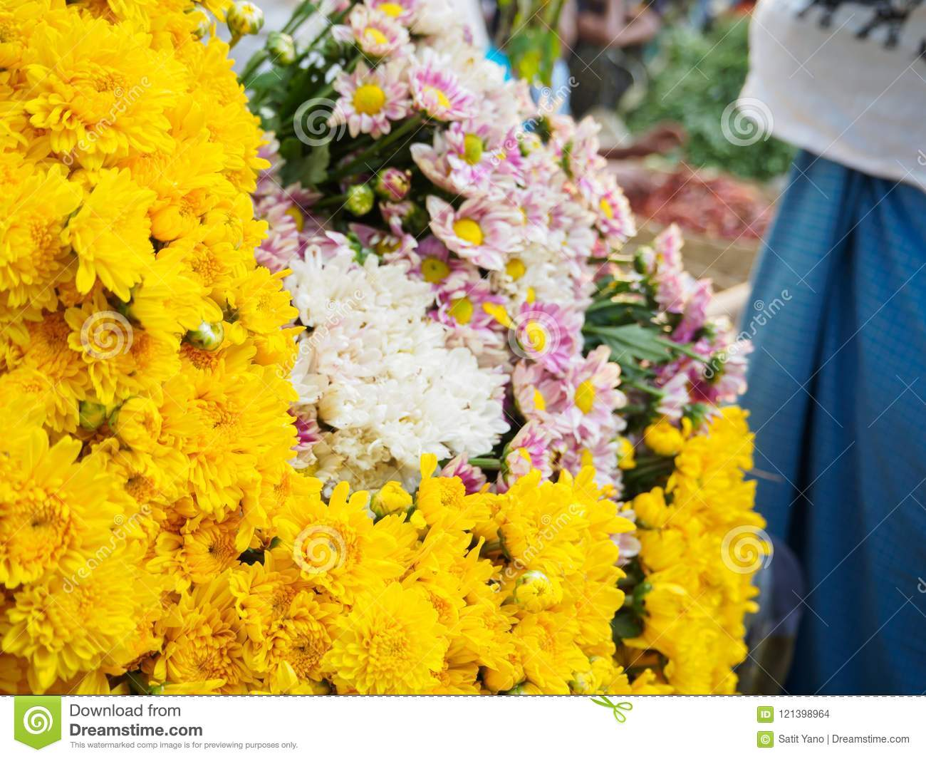 Yellow chrysanthemum flowers bloom in bagan market stock photo download yellow chrysanthemum flowers bloom in bagan market stock photo image of color mightylinksfo