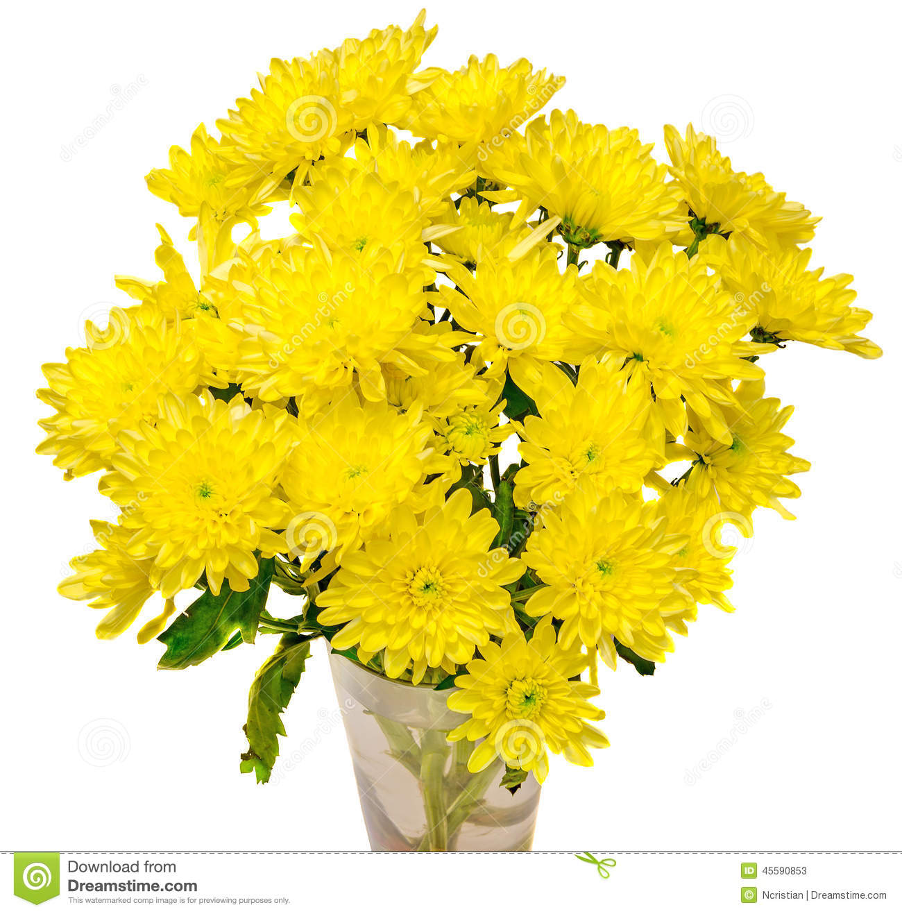 Yellow chrysanthemum flowers in a transparent vase close up white download yellow chrysanthemum flowers in a transparent vase close up white background stock image mightylinksfo