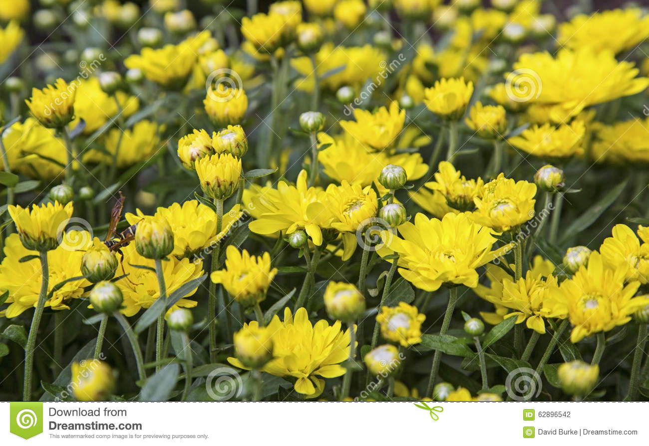 the yellow wallpaper and the chrysanthemums The chrysanthemums: themes, symbolism & analysis 'the yellow wallpaper', a short story written by charlotte perkins gilman and published in 1892, is both a haunting psychological story and a feminist masterpiece gilman.