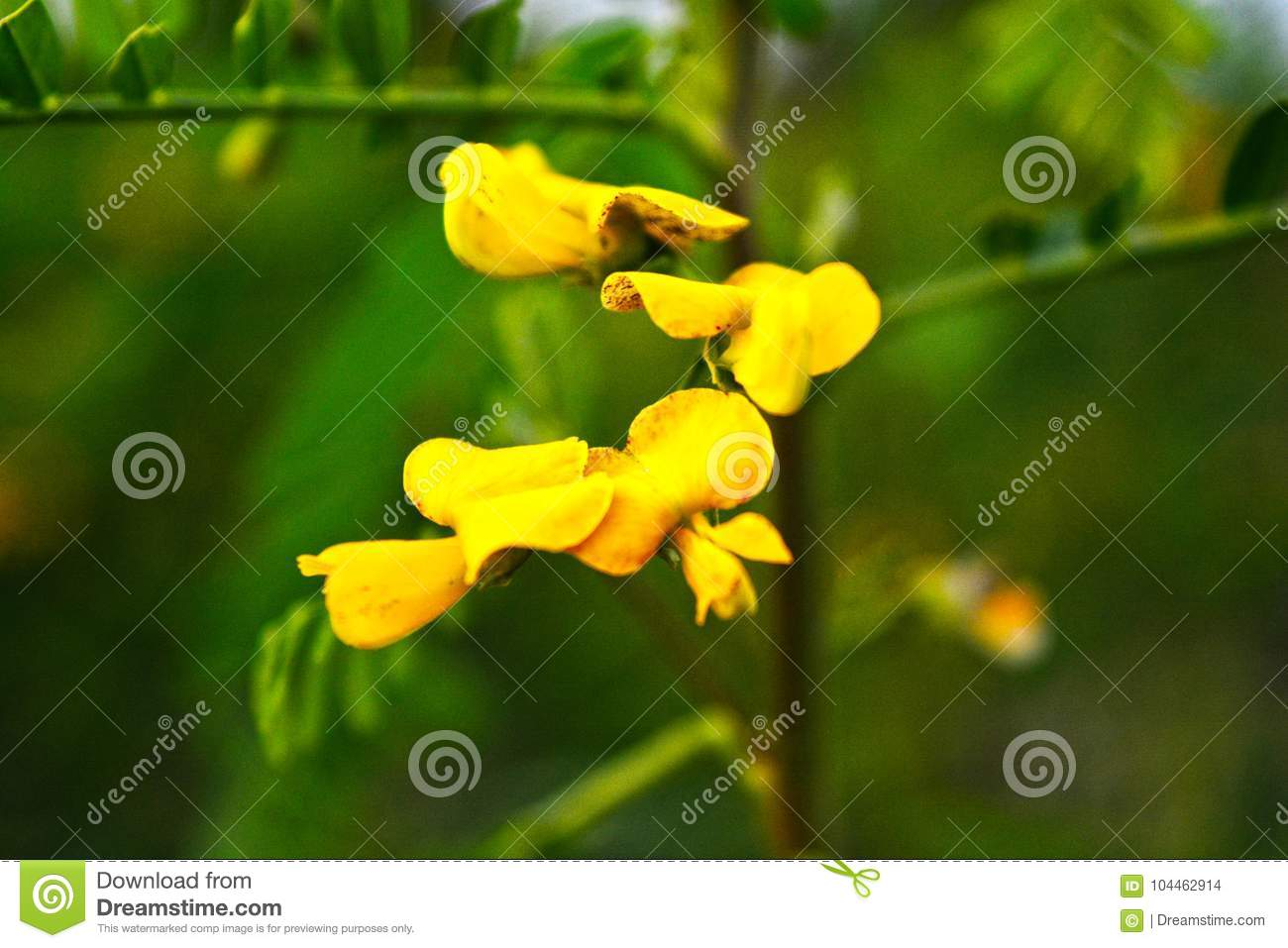 Yellow Color Flower With Blur Background Stock Photo Image Of