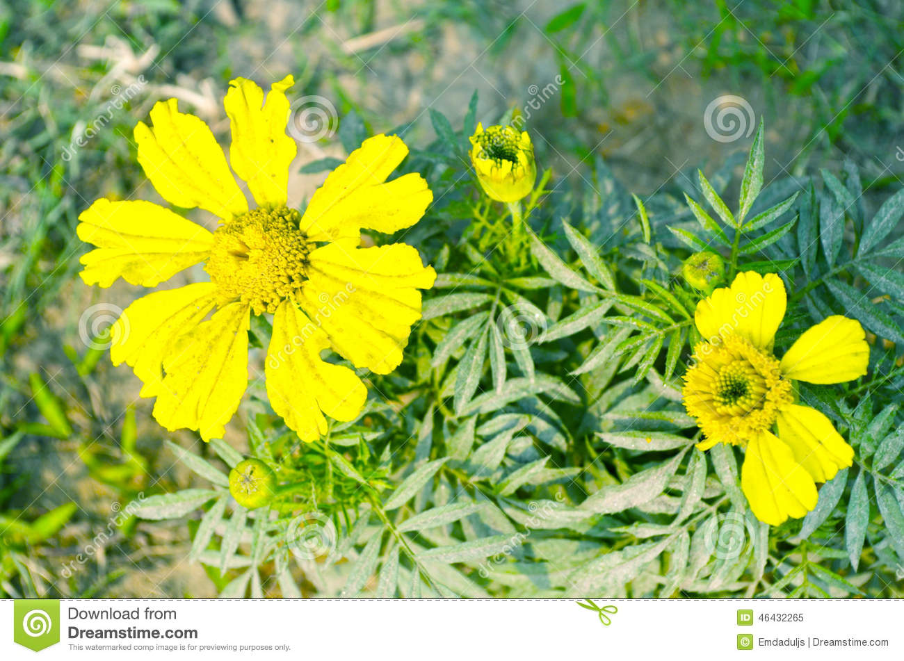 Yellow color flower stock image. Image of beginning, background ...