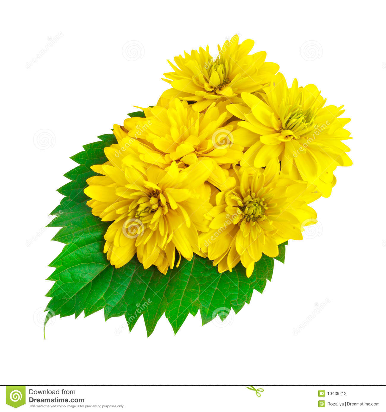 Yellow Color Flowers With Green Leafs Stock Photo Image Of Flora