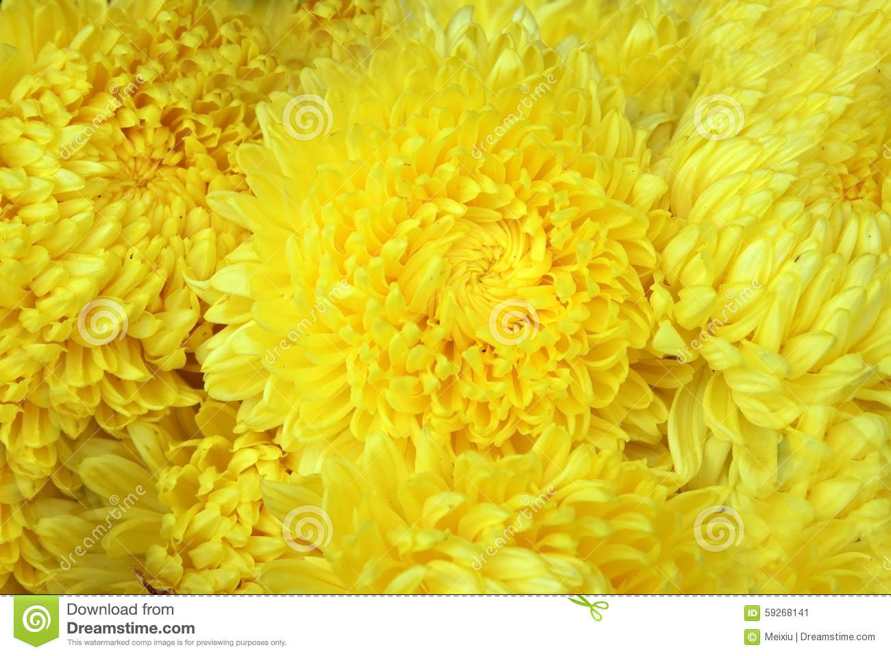 Yellow Colour Flower Stock Image Image Of Nature Blue 59268141