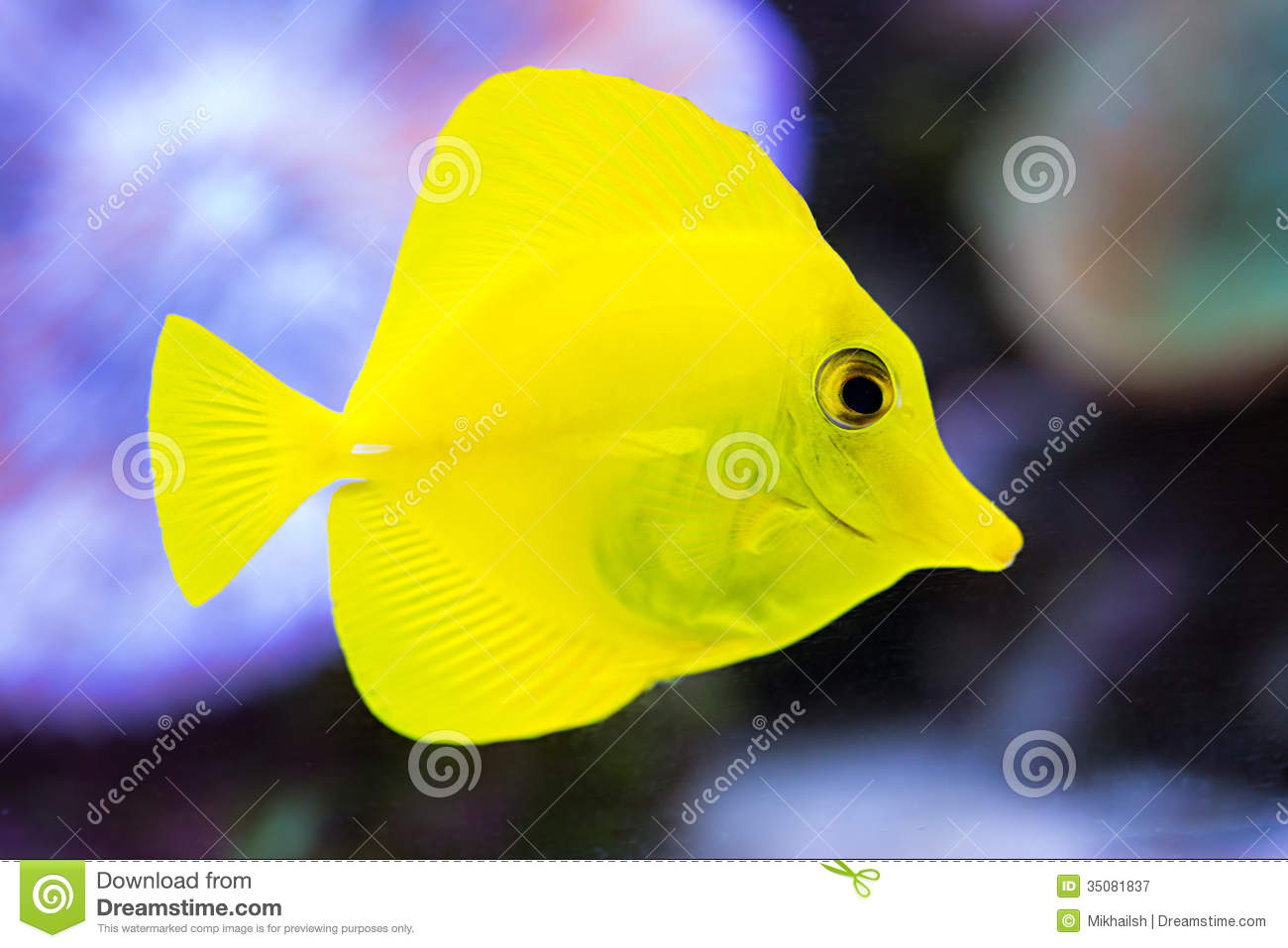 Coral reef fish yellow - photo#6