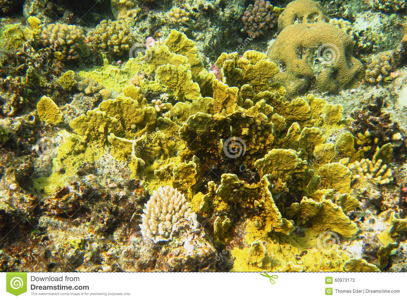 yellow coral in sea