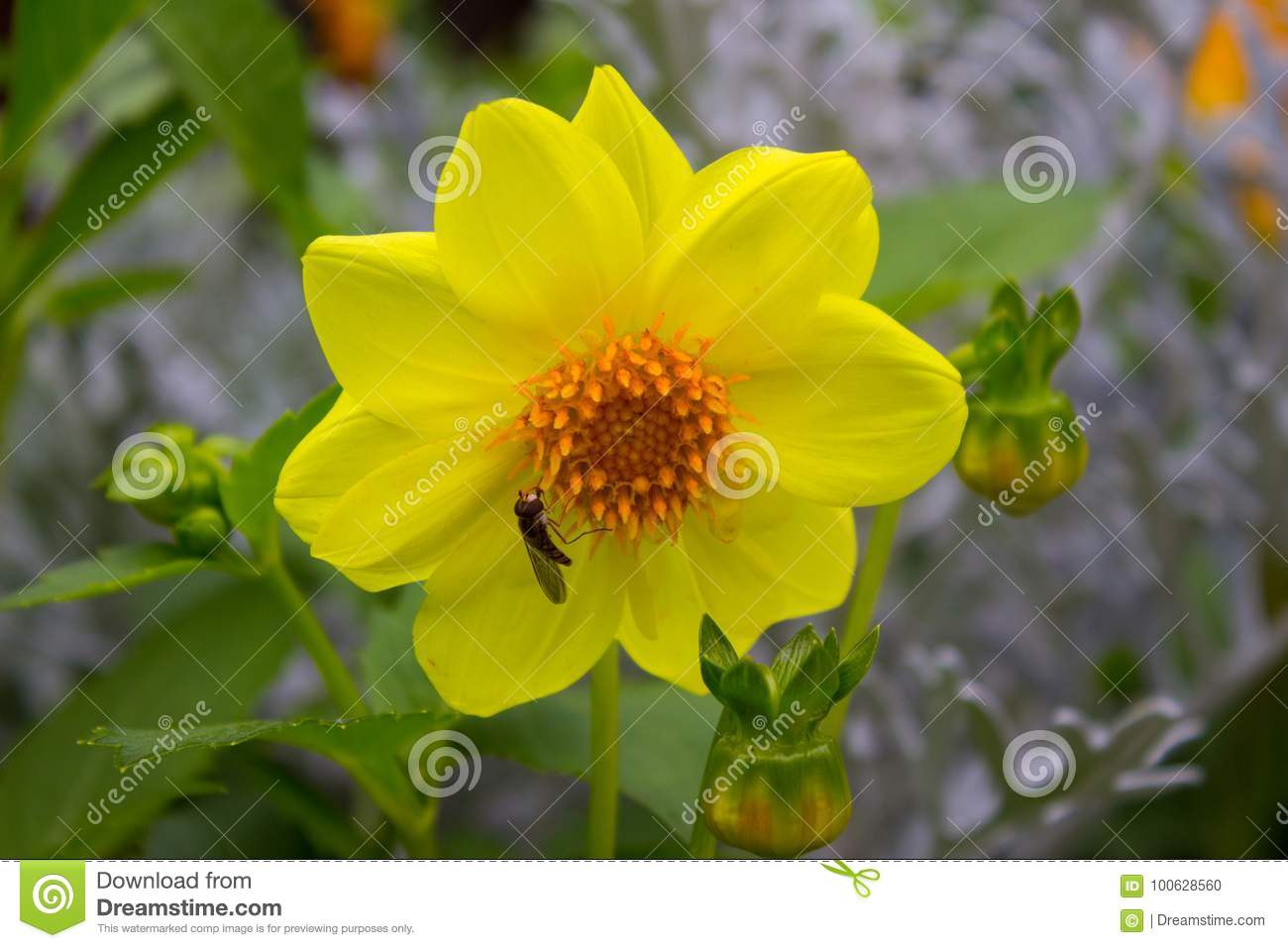 Yellow dahlia flower on background of different types of flowers yellow dahlia flower on background of different types of flowers mightylinksfo