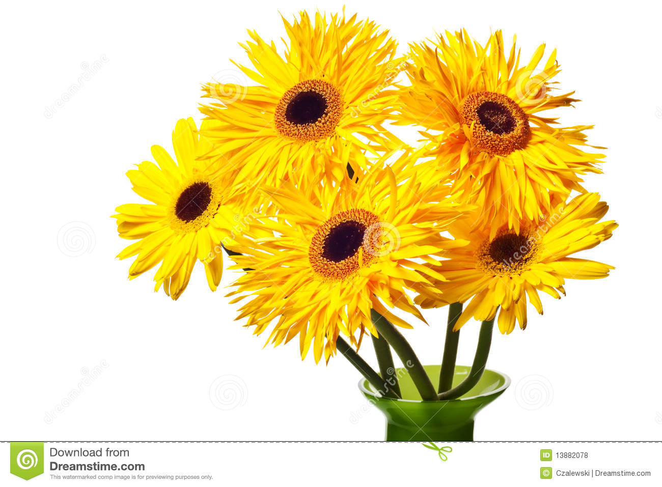 Yellow Gerber Daisy Clip Art Yellow daisies isolated