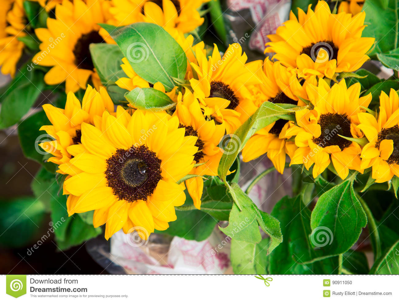 Yellow Daisy With Black Centre Stock Photo Image Of Beautiful
