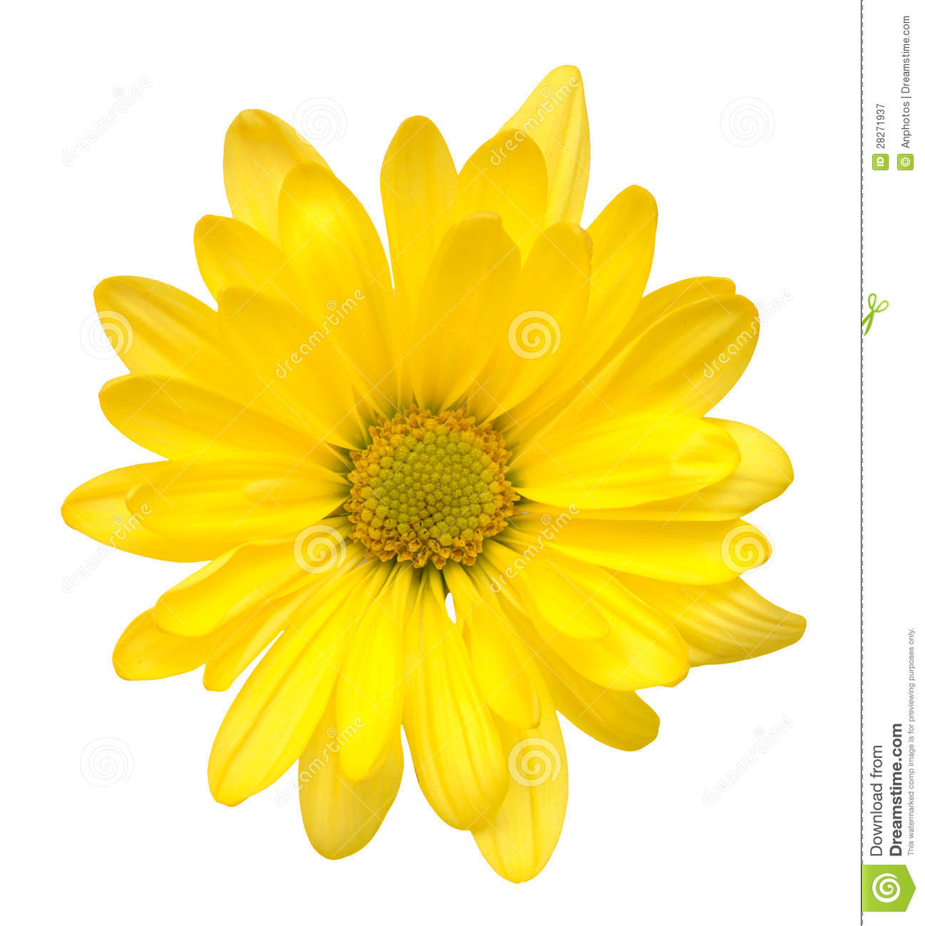 Yellow Daisy Flower Stock Image Image Of Ornament Meditation
