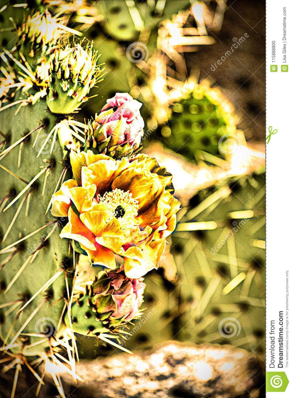 Yellow Desert Flower Of Arizona Stock Photo Image Of Fall Arizona