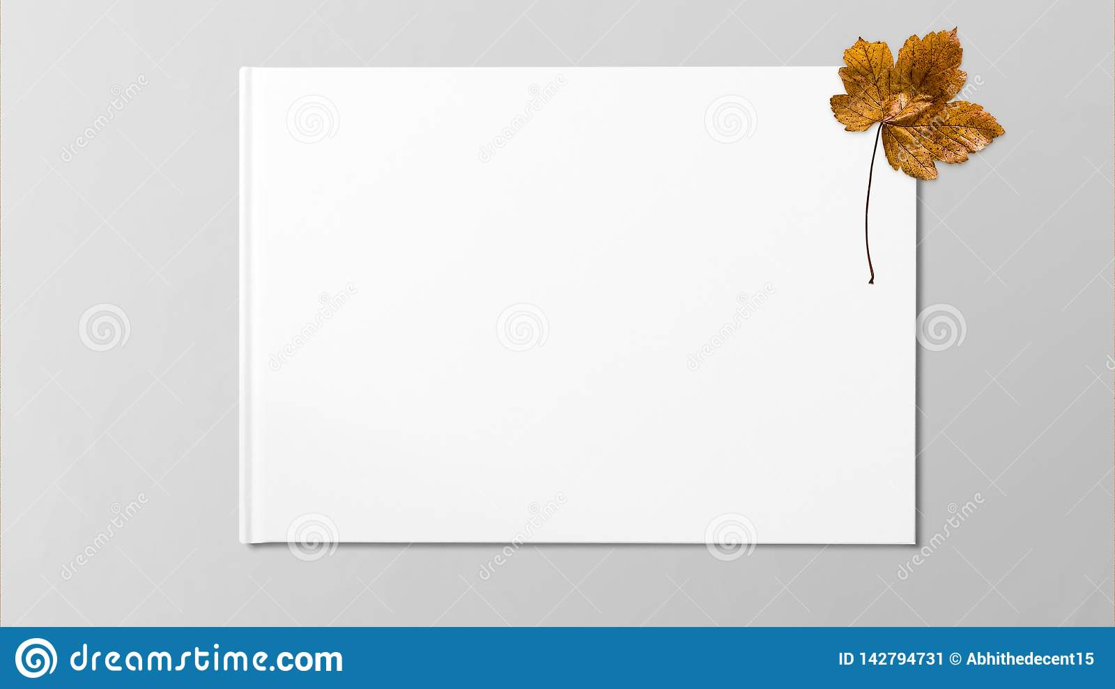 Yellow dried maple leaf on white background.