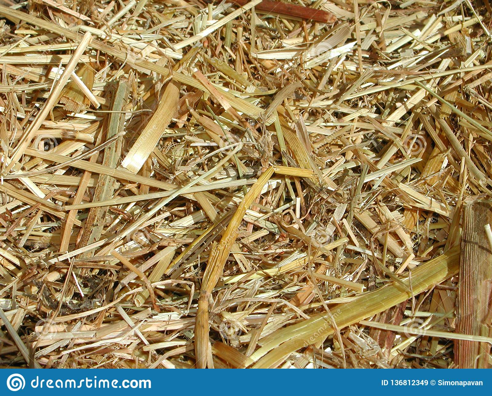 Dried straw close up