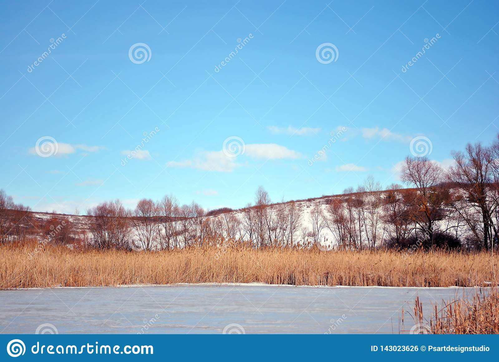 Yellow dry reeds on lake covered with ice bank with willow trees without leaves covered with snow, blue cloudy sky