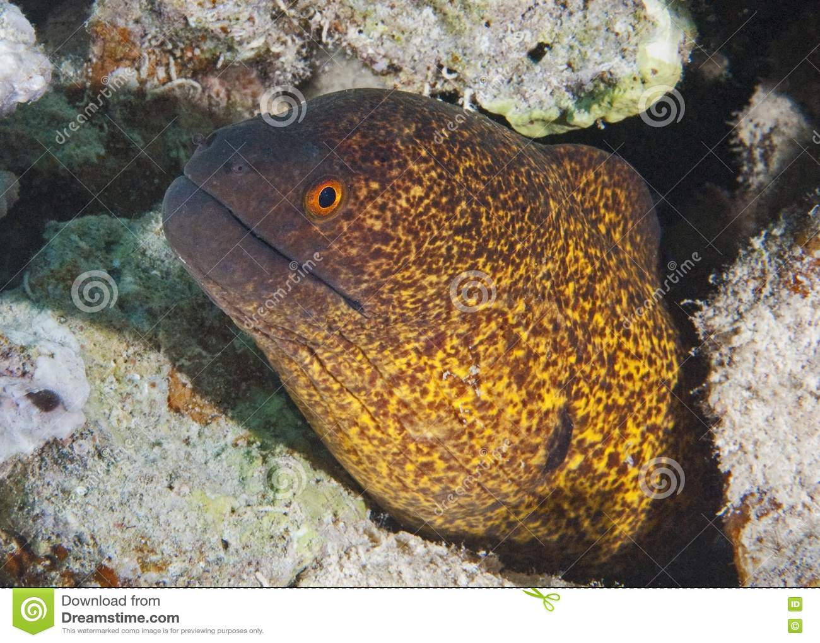 how to cook yellow eel