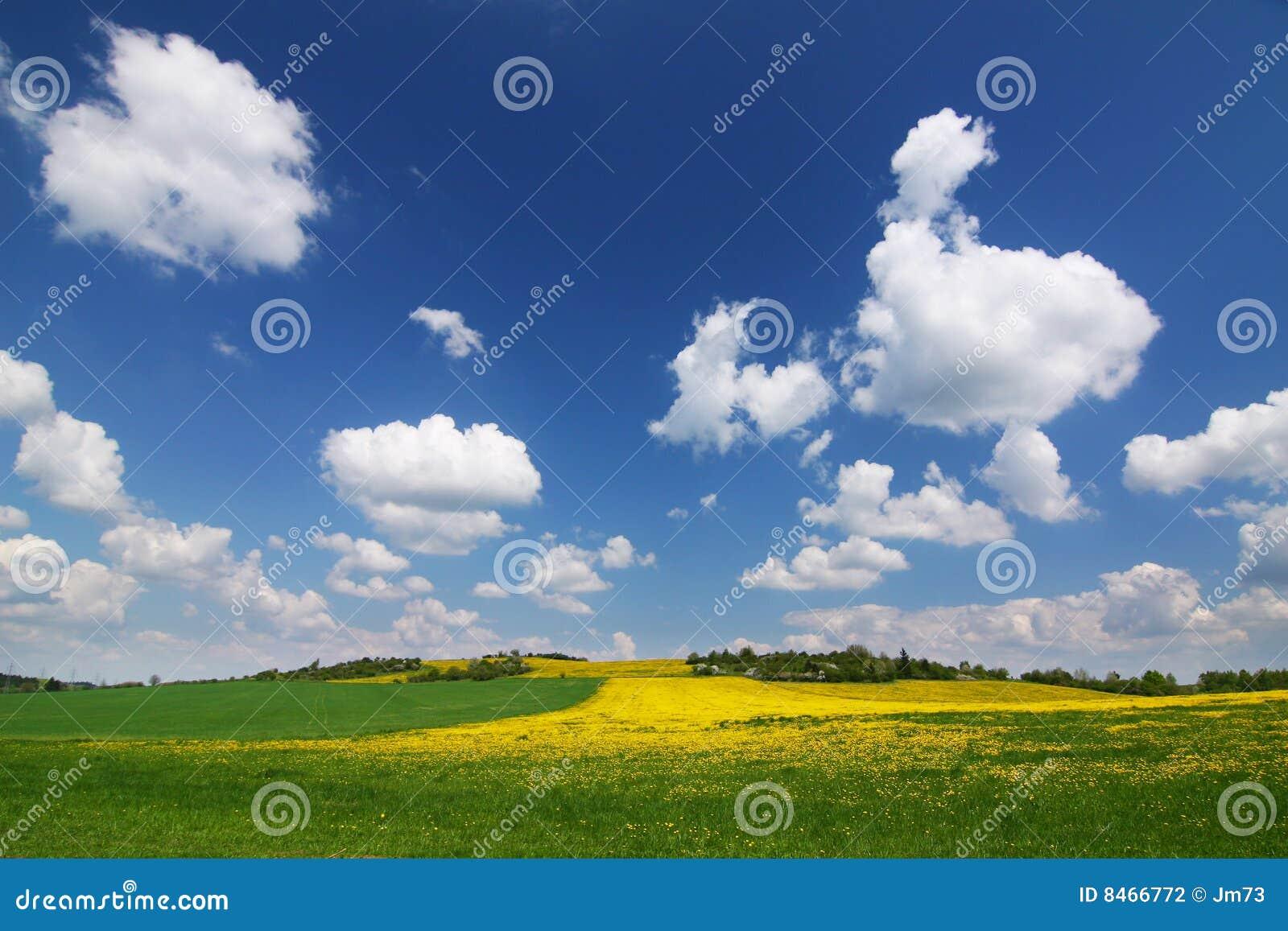 Yellow för bygdmaskrosfjäder