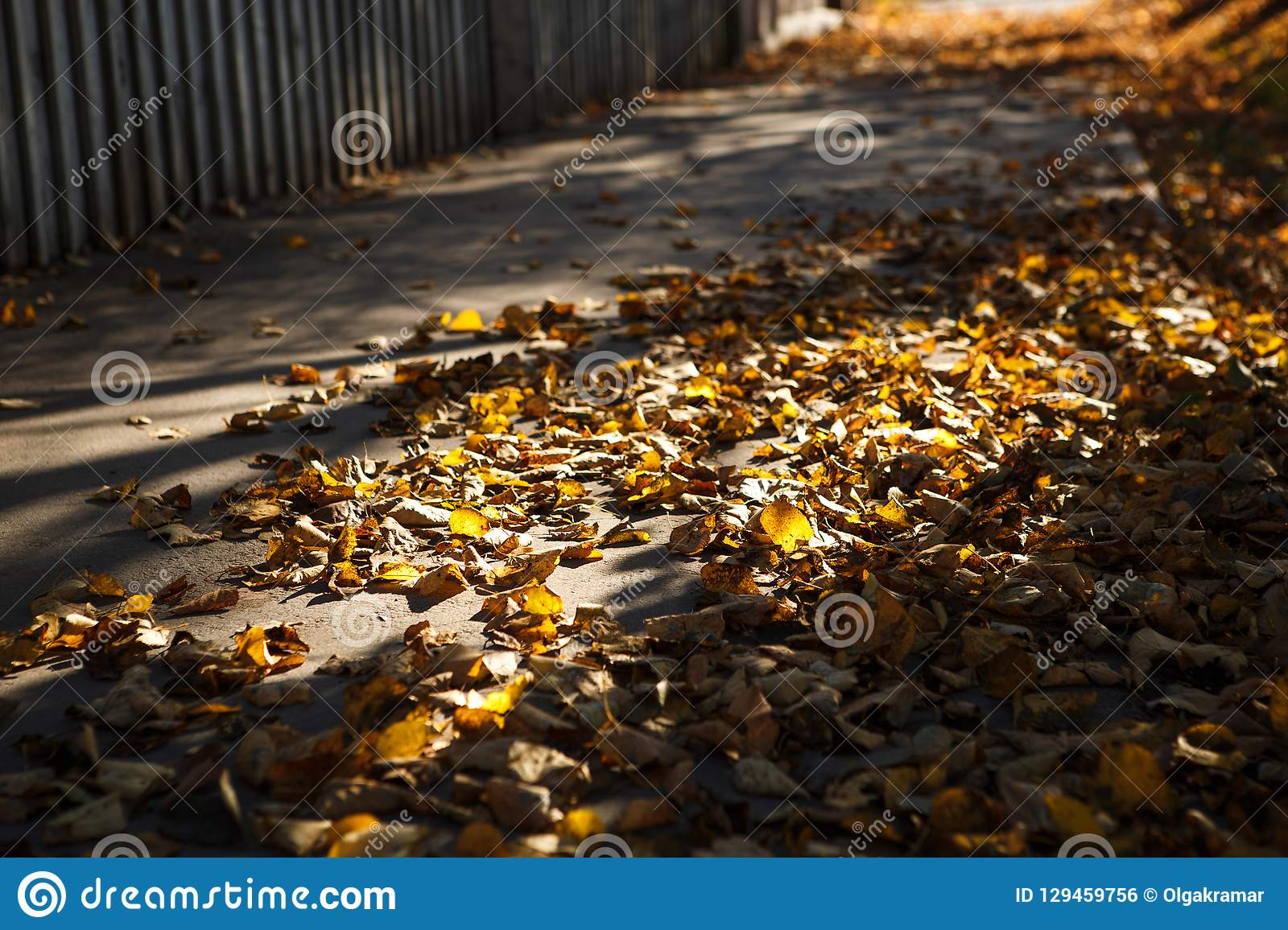 Golden autumn, leaves on earth in the bright light of the sun