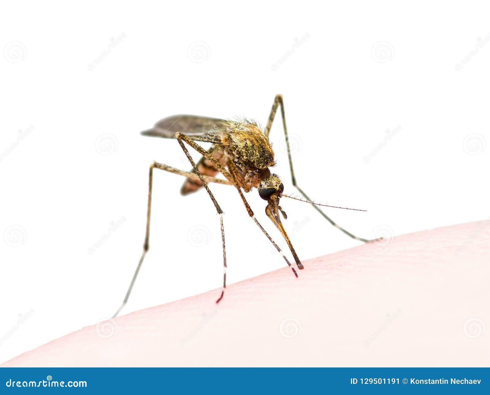 zika virus bug bite
