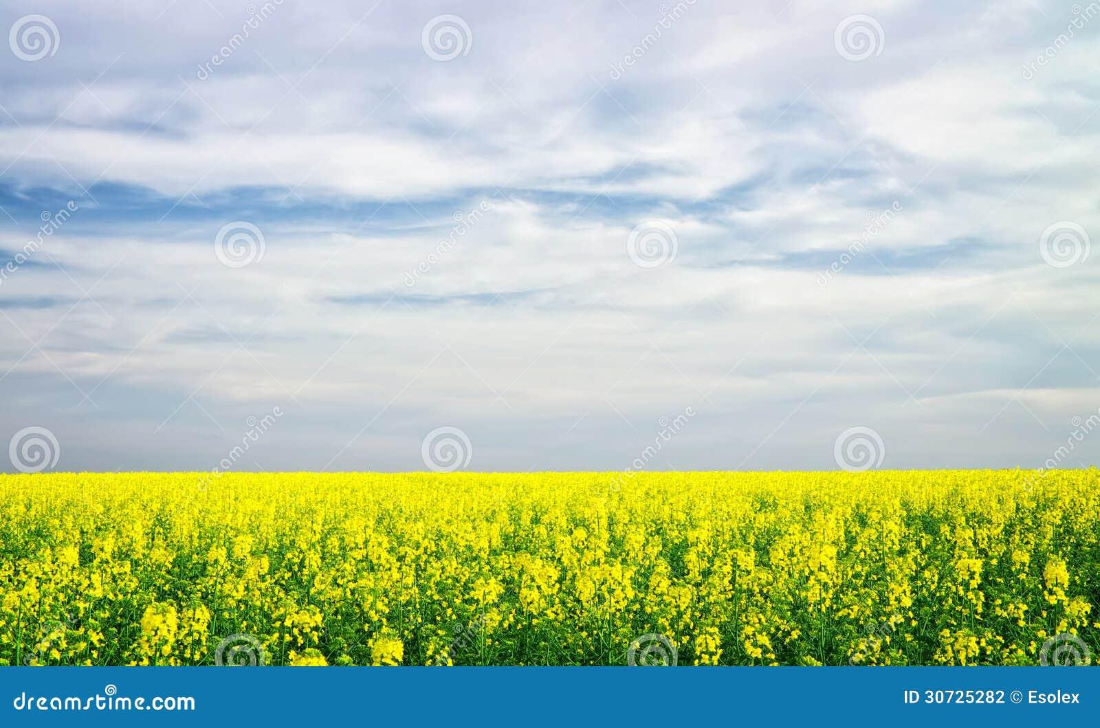 beautiful yellow field landscape - photo #22
