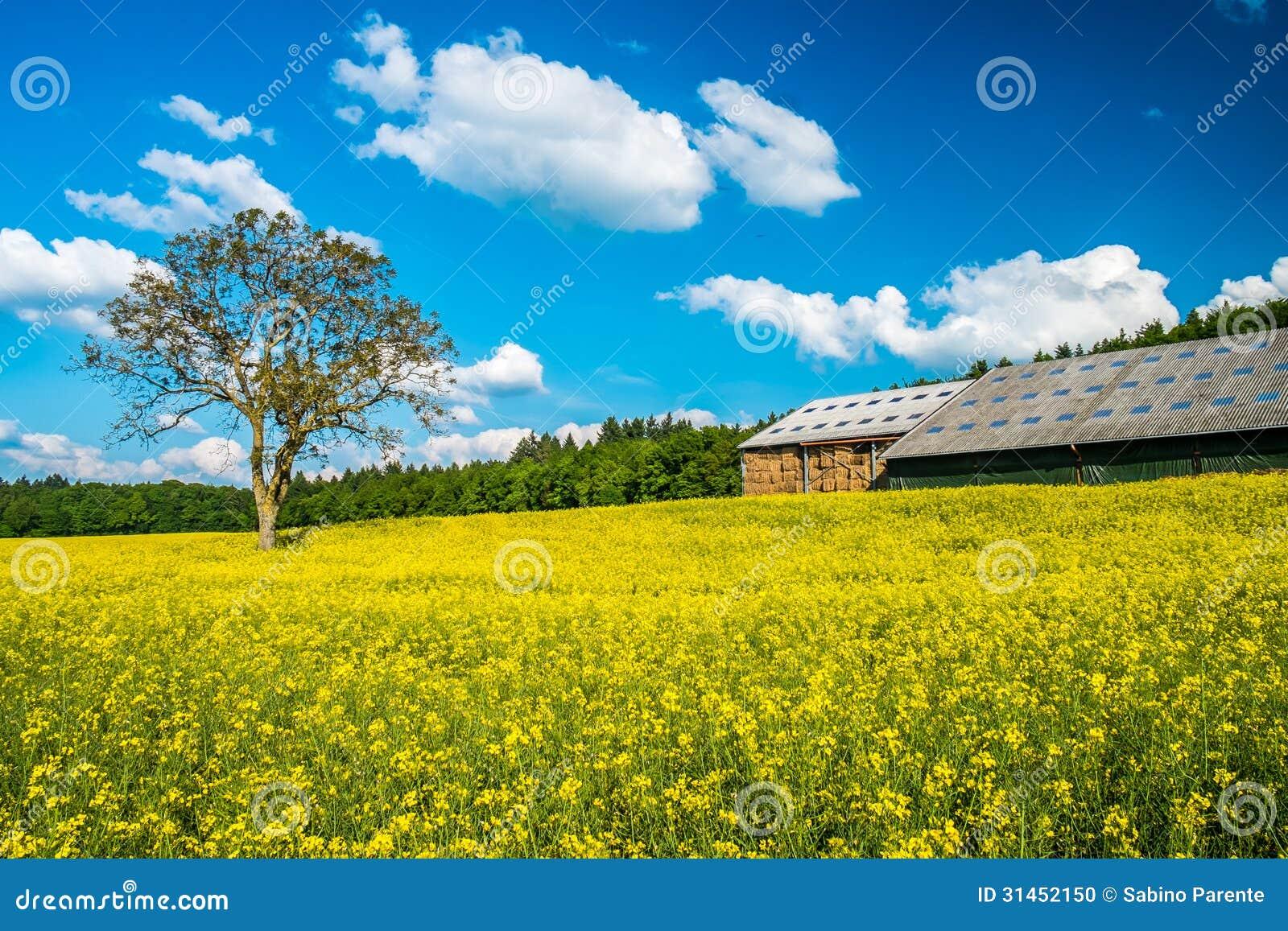 beautiful yellow field landscape - photo #10