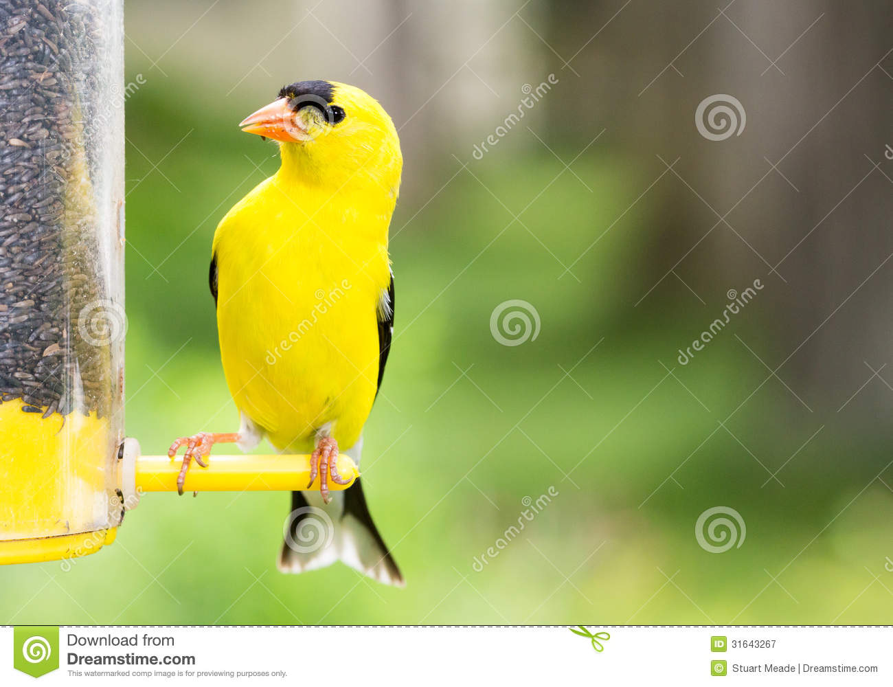 don warbler we who the migrate our it rumped feeder through yellow that see host enjoyed was to t are mainenaturediary a birds feeders may today until often male bird they suet