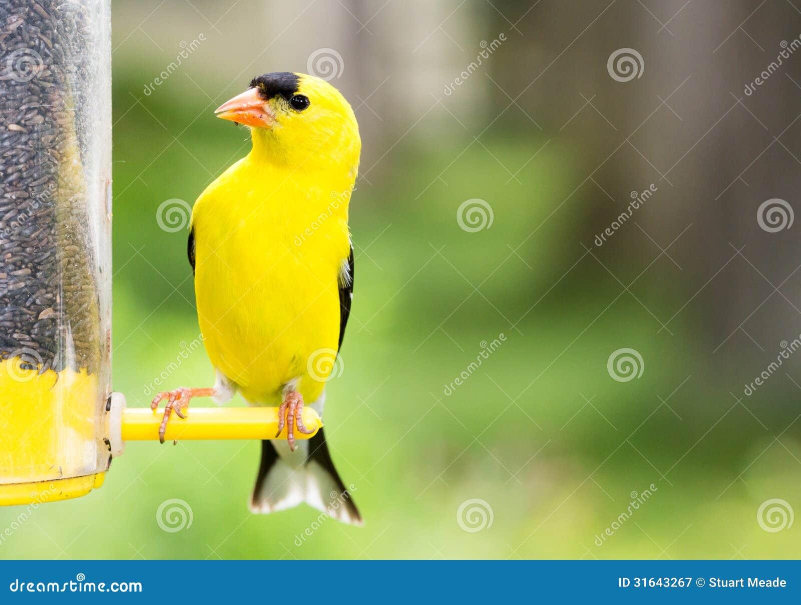 zen old from best yellow feeder evolve pi better birdfeeder good birdfeeders to finch the wbu bird