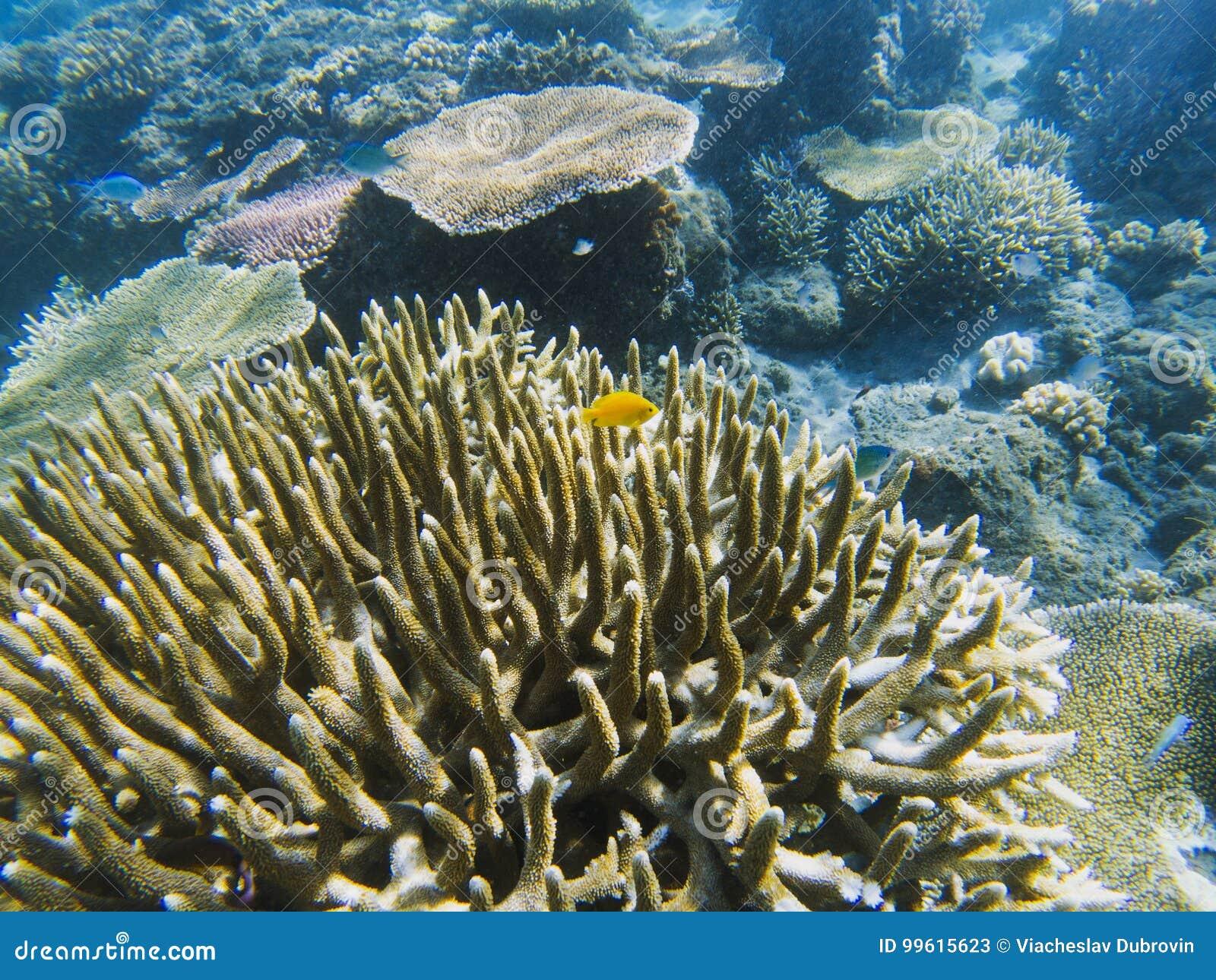 Yellow fish in spiky coral reef. Tropical seashore inhabitants underwater photo.