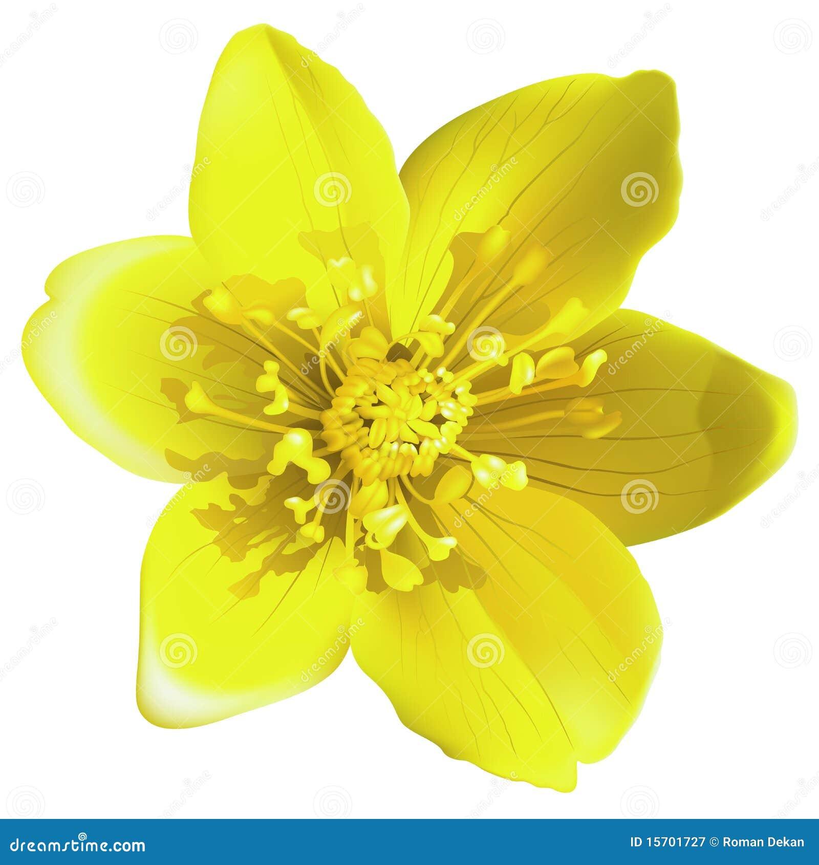 Желтые цветы по найти