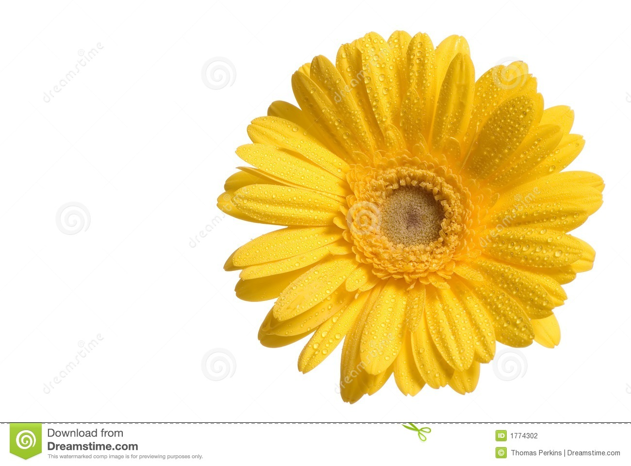 Yellow flower stock photo image of bloom romantic aster 1774302 yellow flower mightylinksfo
