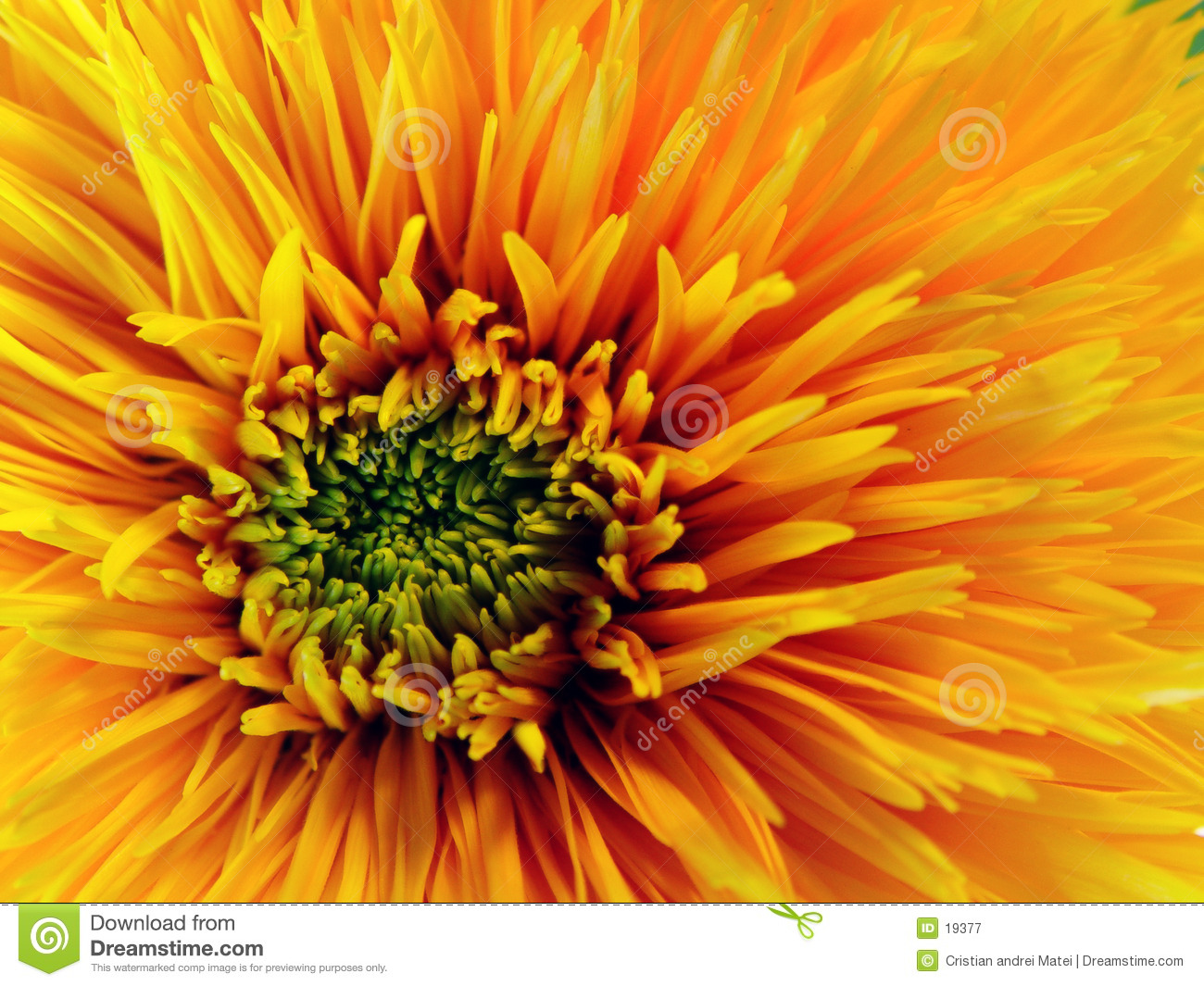 Download Yellow flower stock image. Image of beautiful, detail, details - 19377