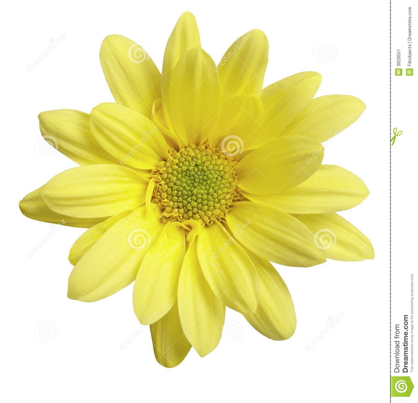 Download Yellow Flower stock image. Image of yellow, flowers, clipping - 3829551