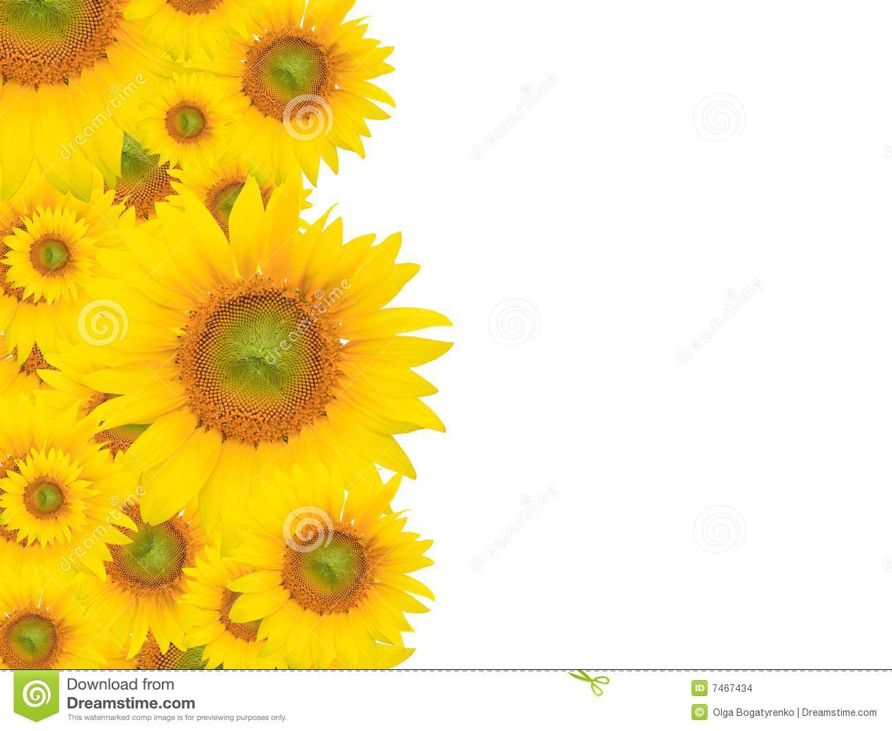 Yellow Flower Background Summer Or Spring Theme Stock Photo Image