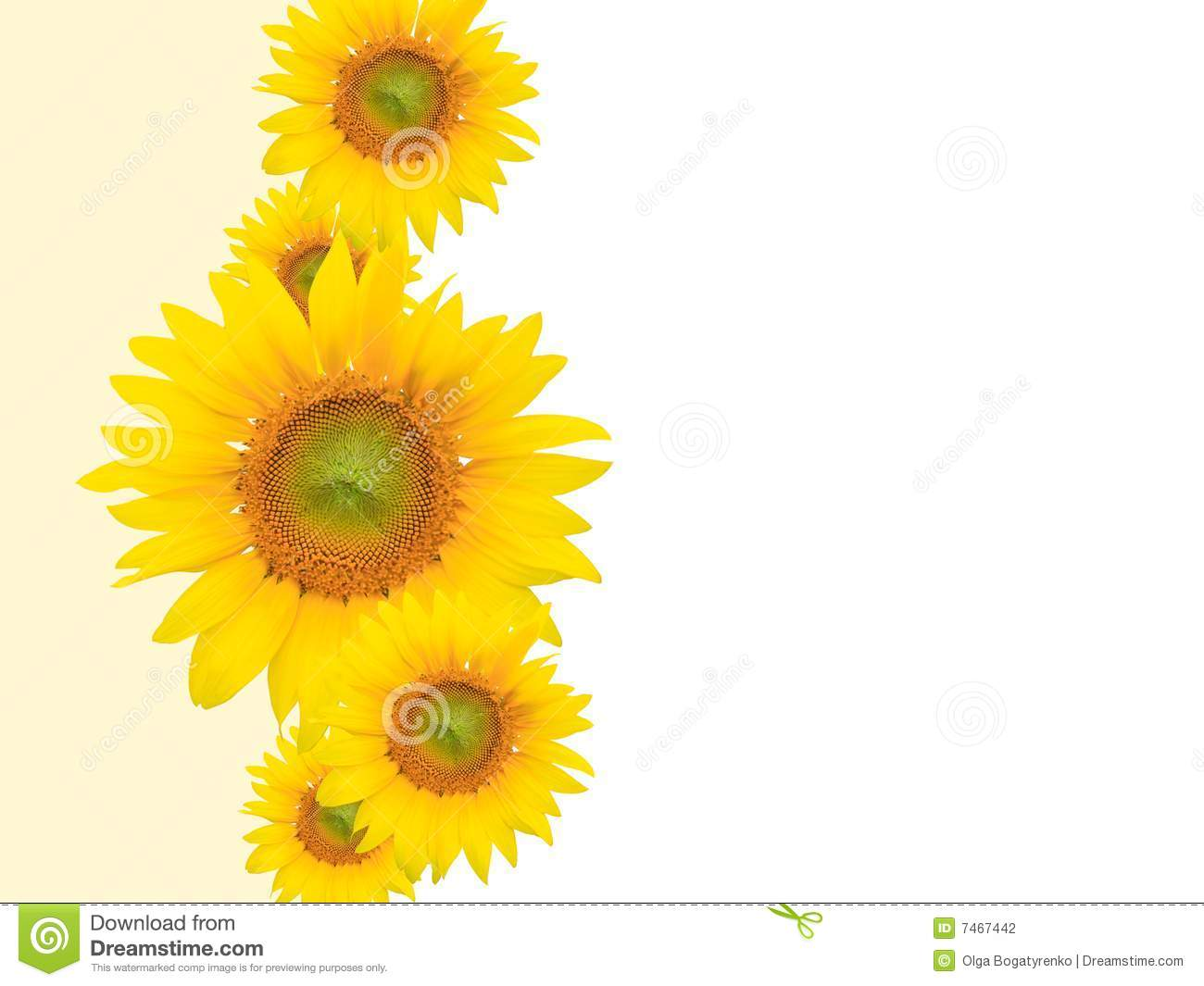 Yellow spring flowers background