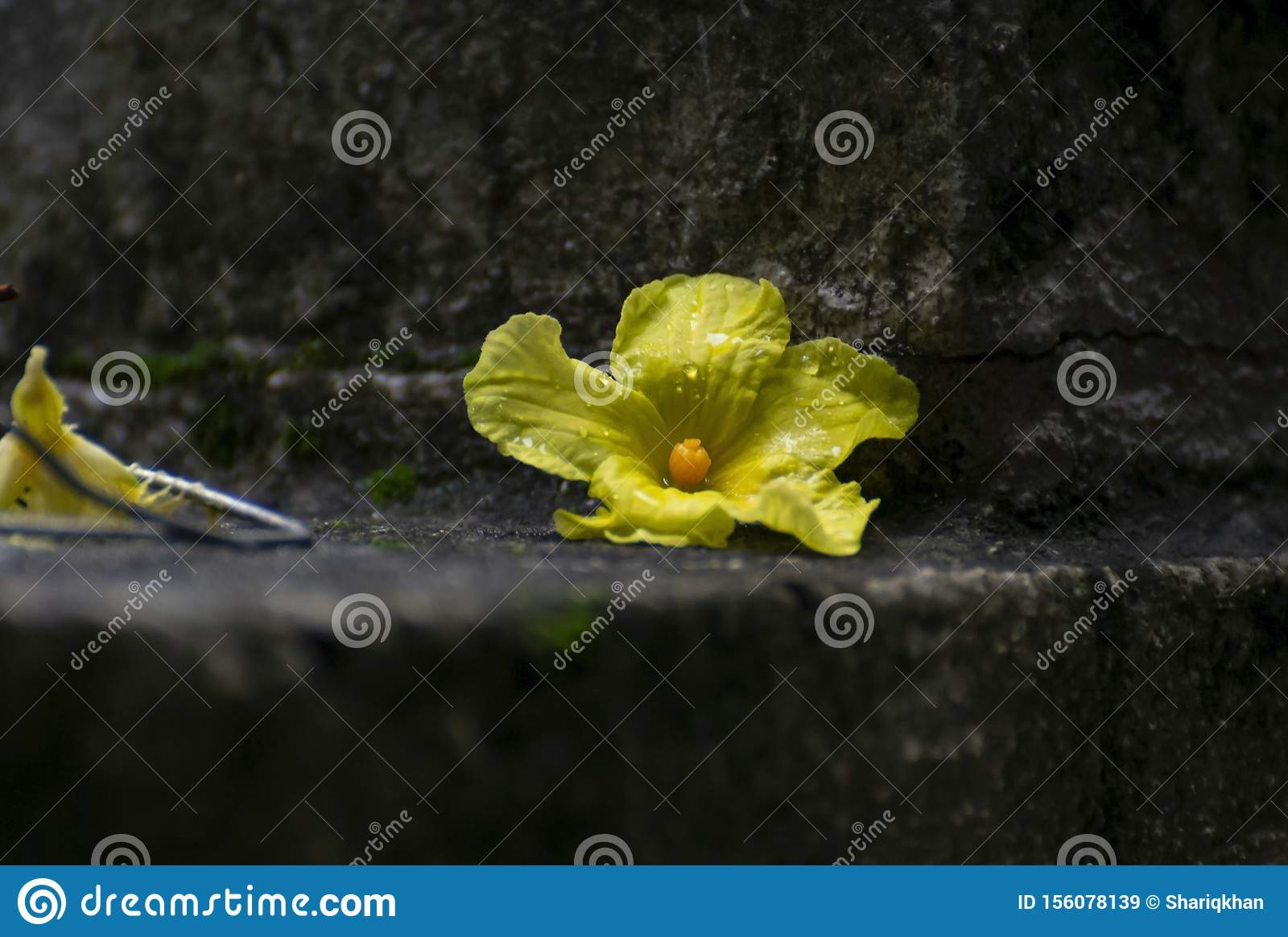 Yellow Flower Laying on Ground
