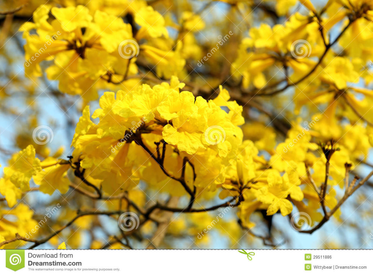 Yellow flower blossom stock photo image of design close 29511886 yellow flower blossom mightylinksfo Image collections