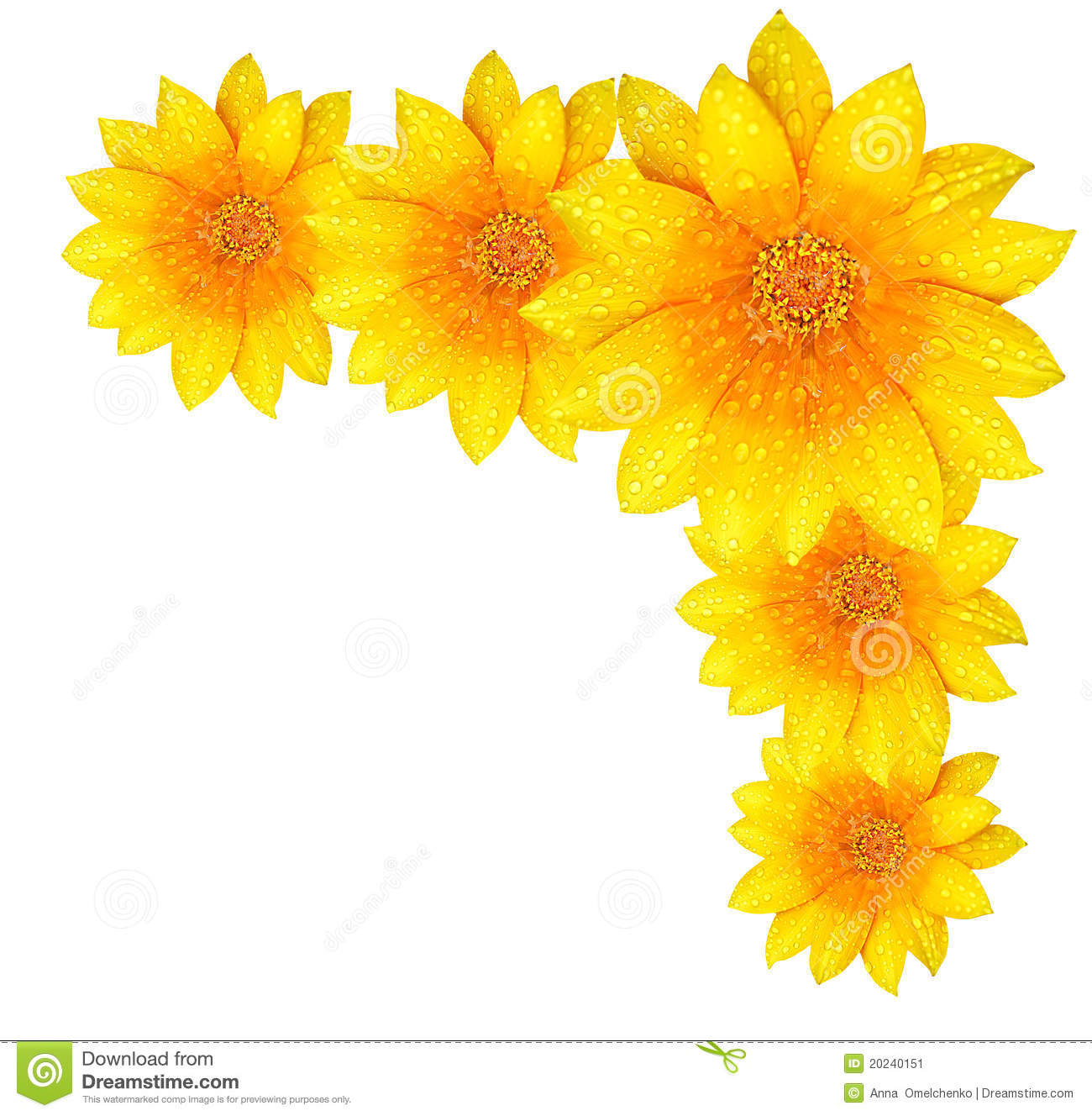 Yellow Flower Border Stock Image Image Of Natural Color 20240151