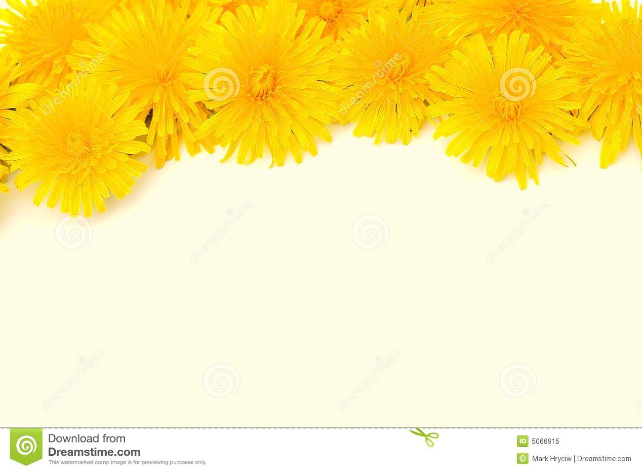Yellow Flower Border Isolated Stock Image Image Of Blank Note