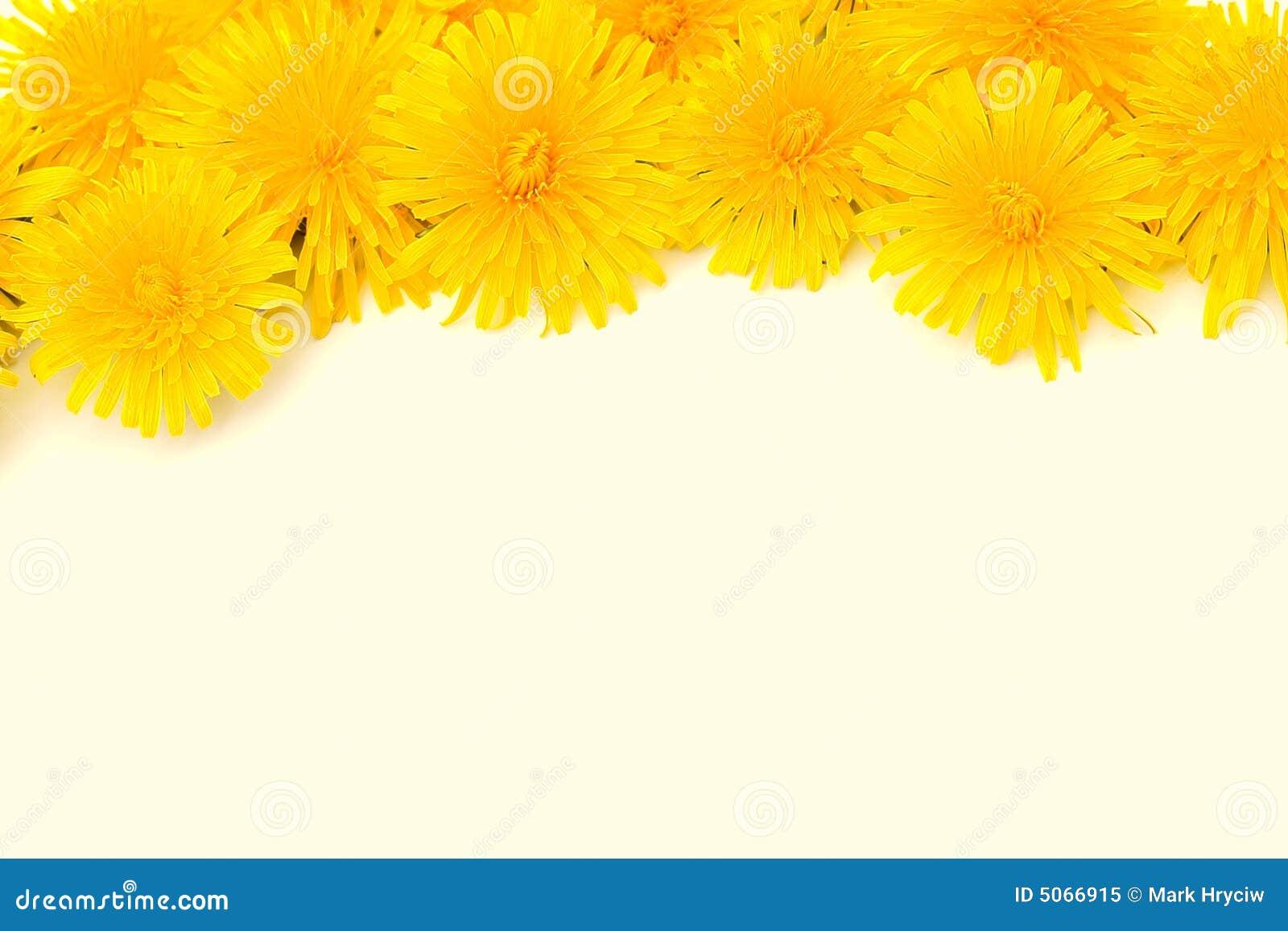 Yellow Flower Border Isolated Royalty Free Stock Photo - Image ...