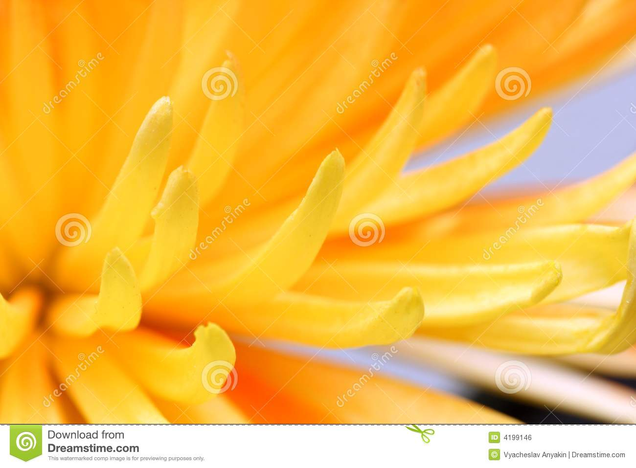 Yellow Flower Close Up Royalty Free Stock Image Image