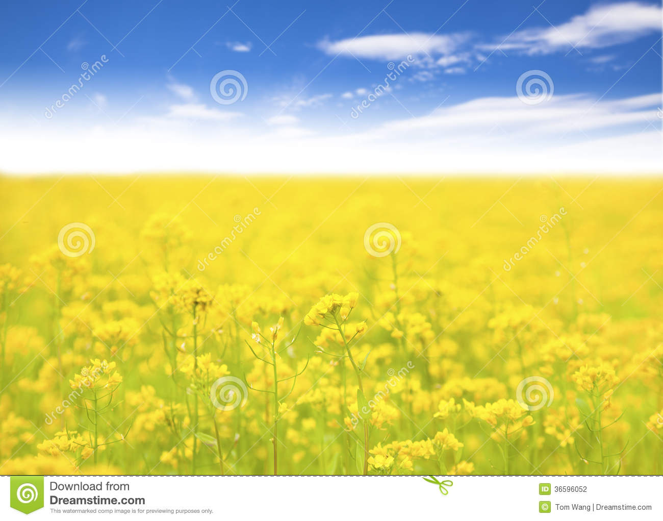 Yellow Flower In Field And Blue Sky Background Stock Photo Image