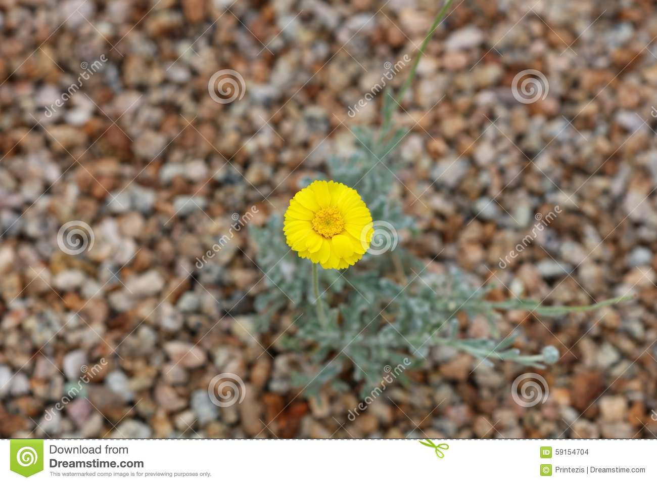 Yellow flower on gravel background large file stock for Soil yellow color