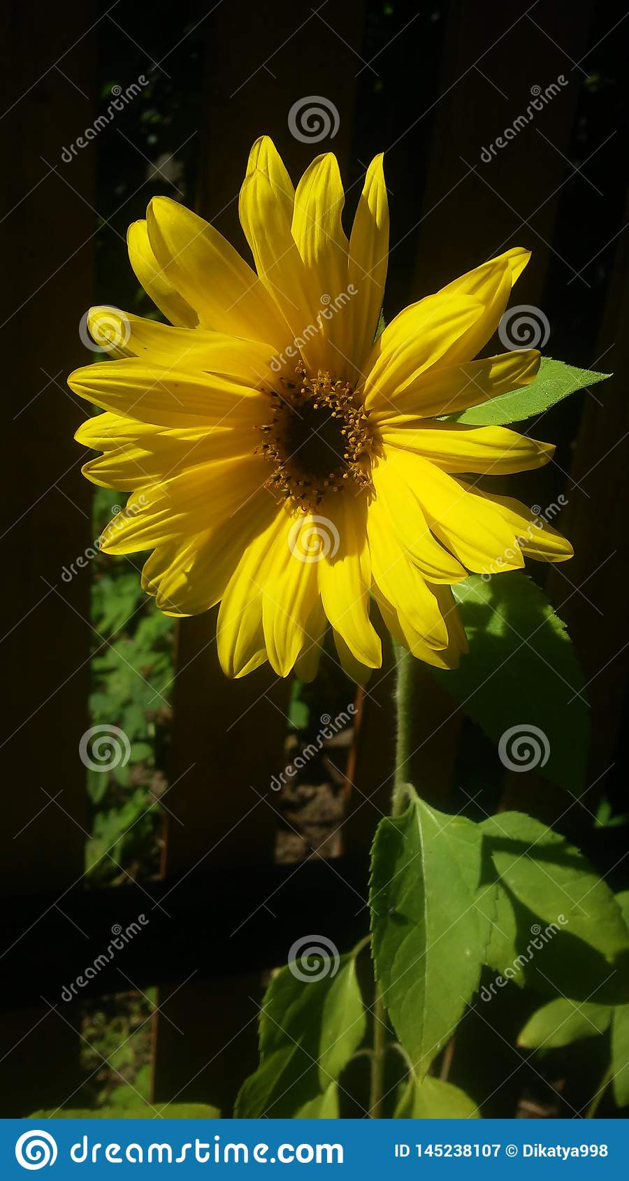 Yellow flower on the green background